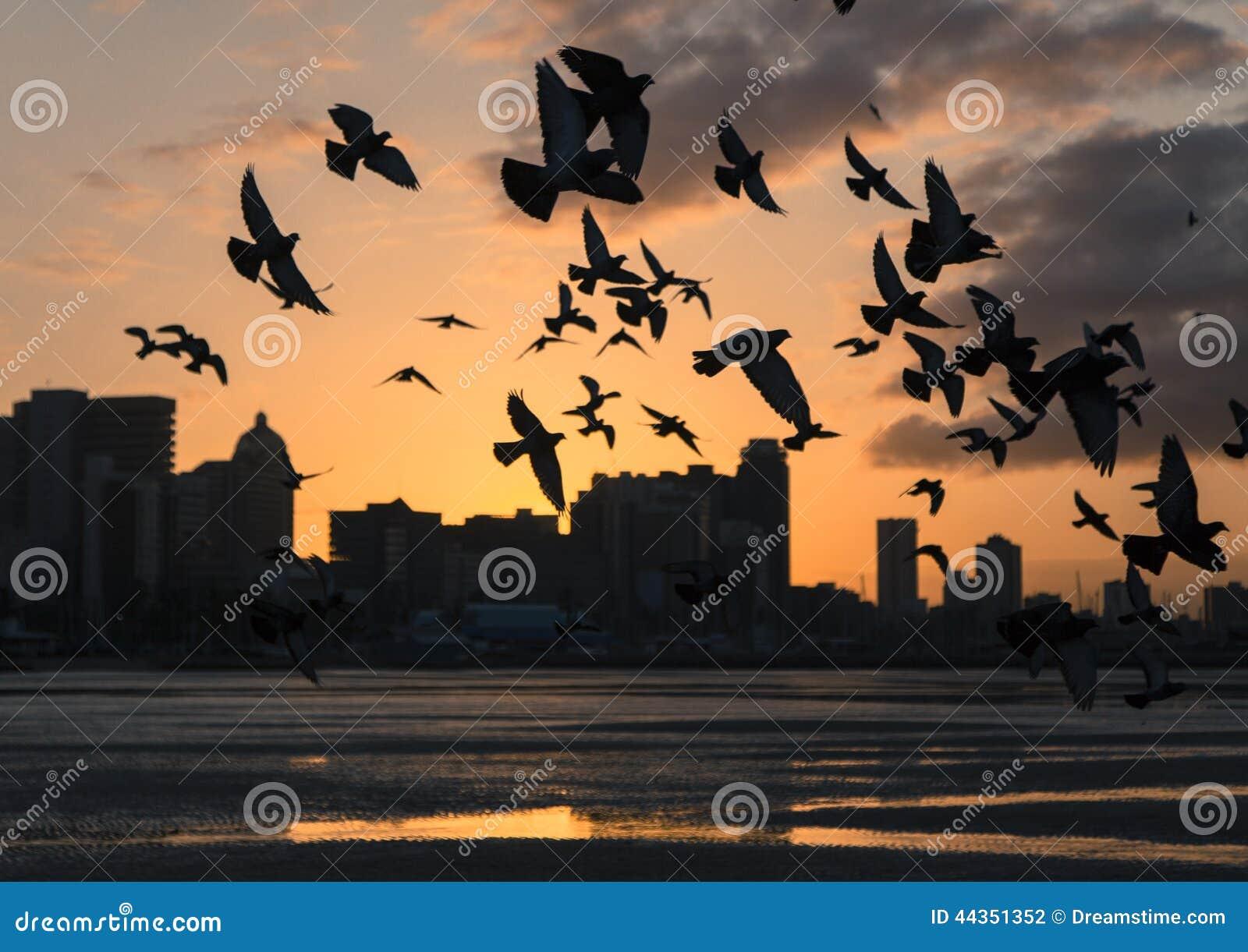 Uccelli ad alba