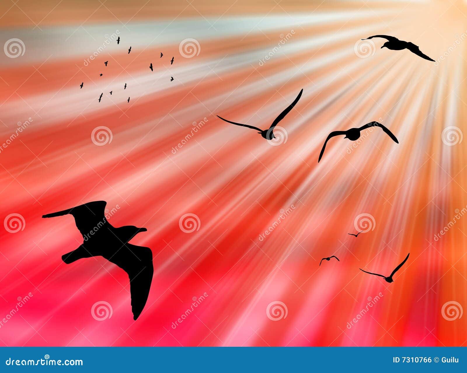 Uccelli al sole