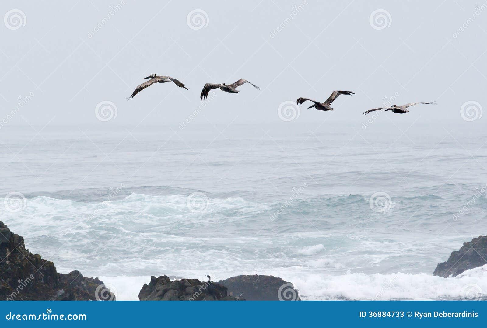 Download Uccelli Che Sorvolano Le Onde Ed Attraverso La Nebbia Immagine Stock - Immagine di corsa, turismo: 36884733