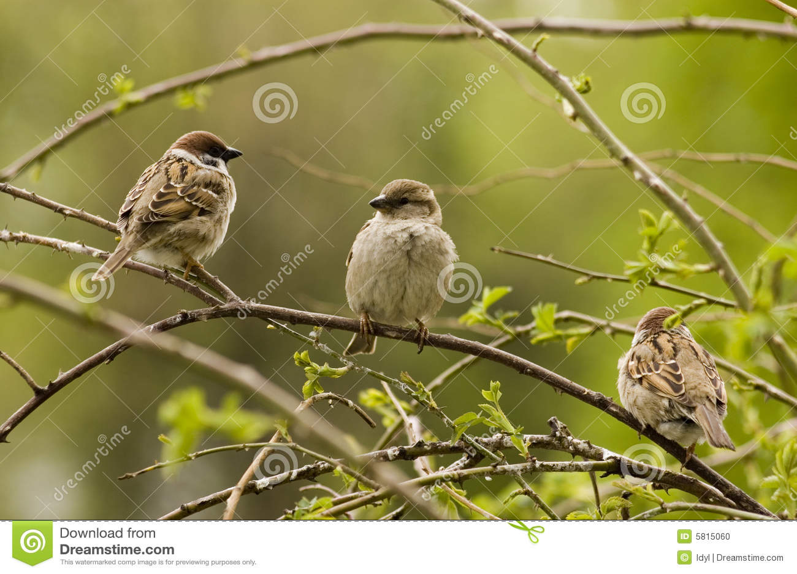 Uccelli del paradiso.