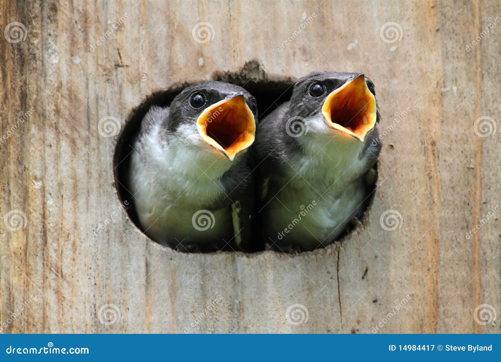 Uccelli di bambino in una Camera dell uccello