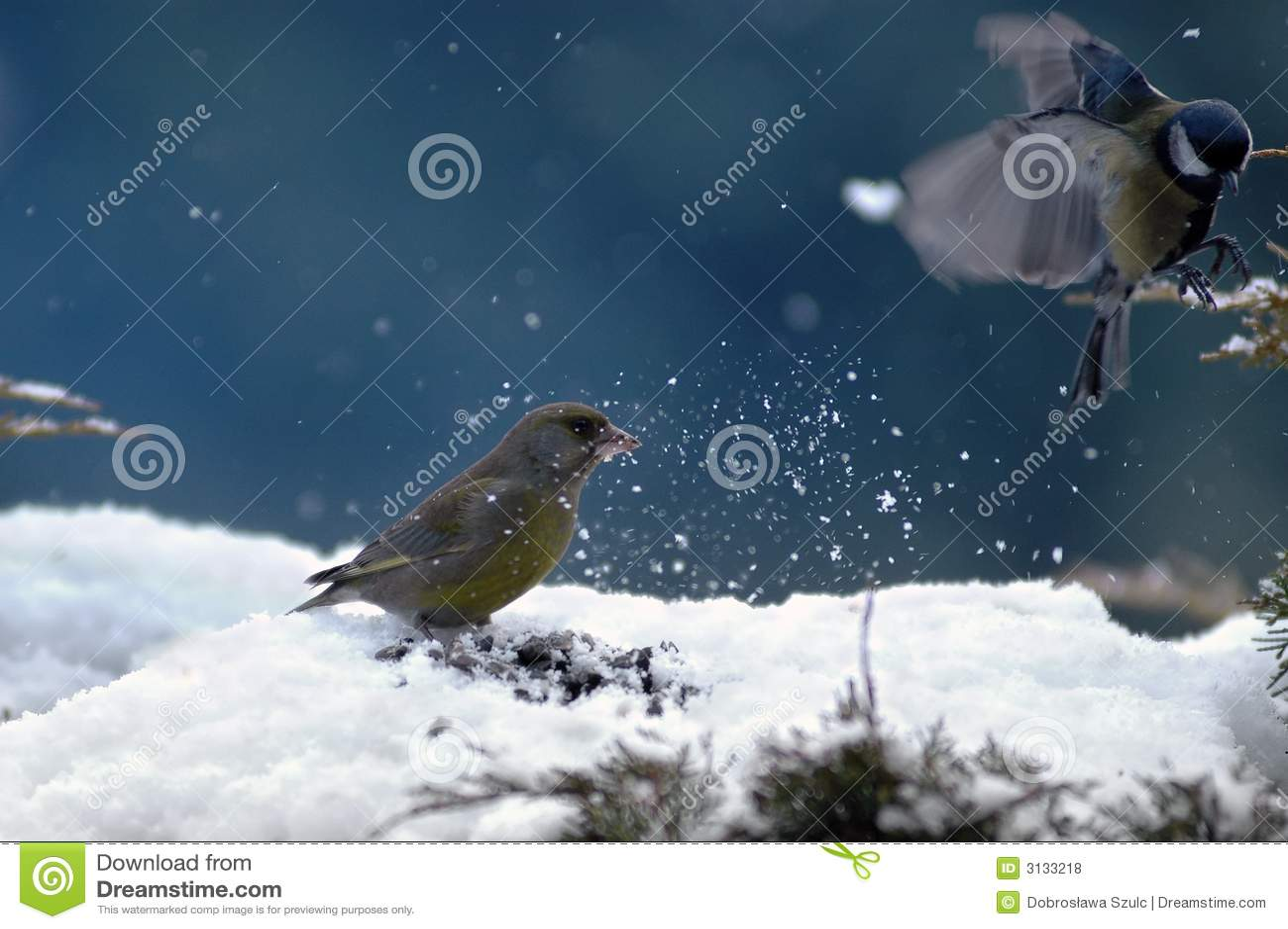 Uccelli di inverno