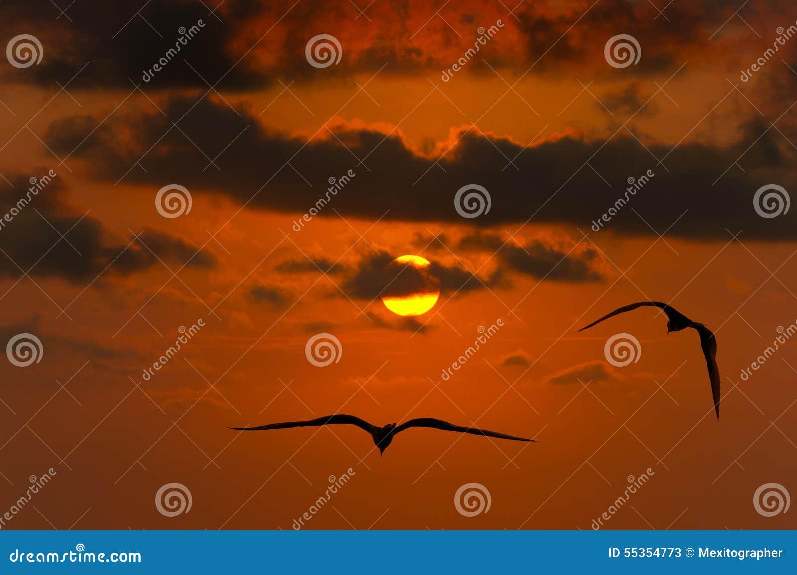 Uccelli di libertà che pilotano siluetta di speranza