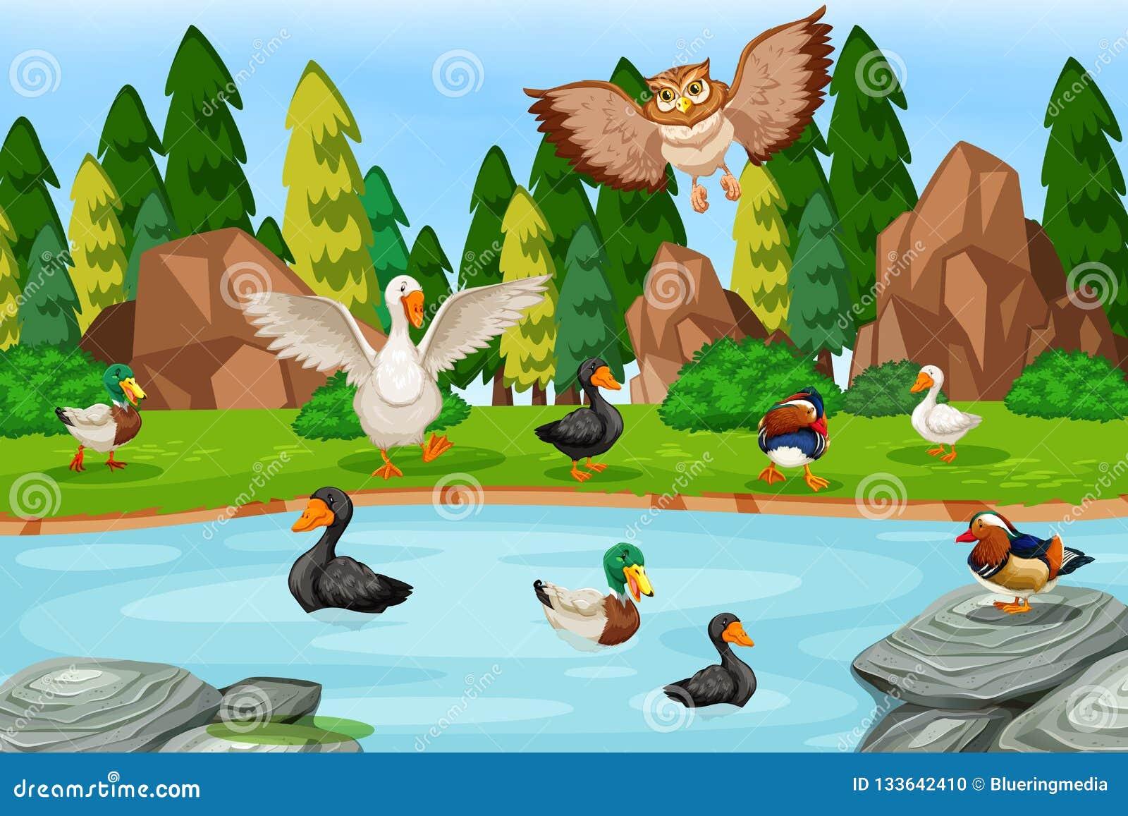 Uccelli nella scena del lago