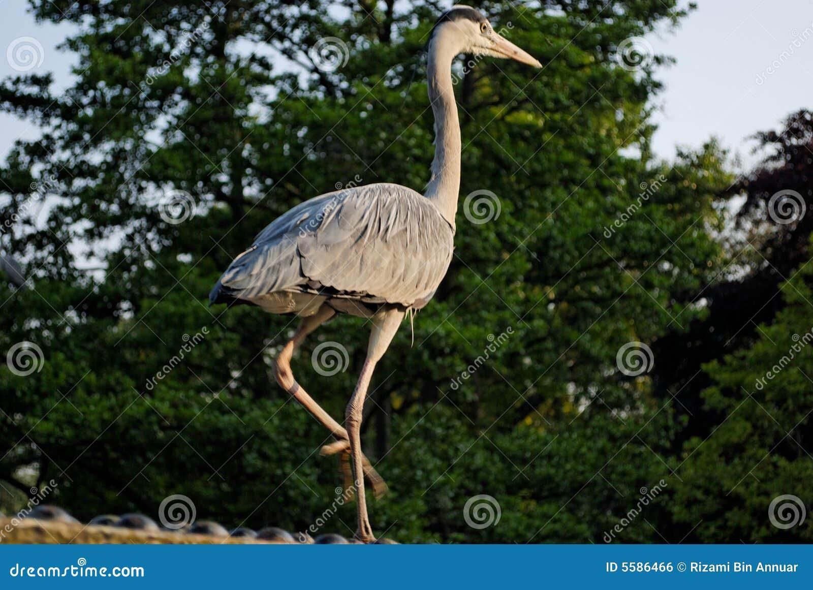 Uccelli nella sosta del reggente - 2