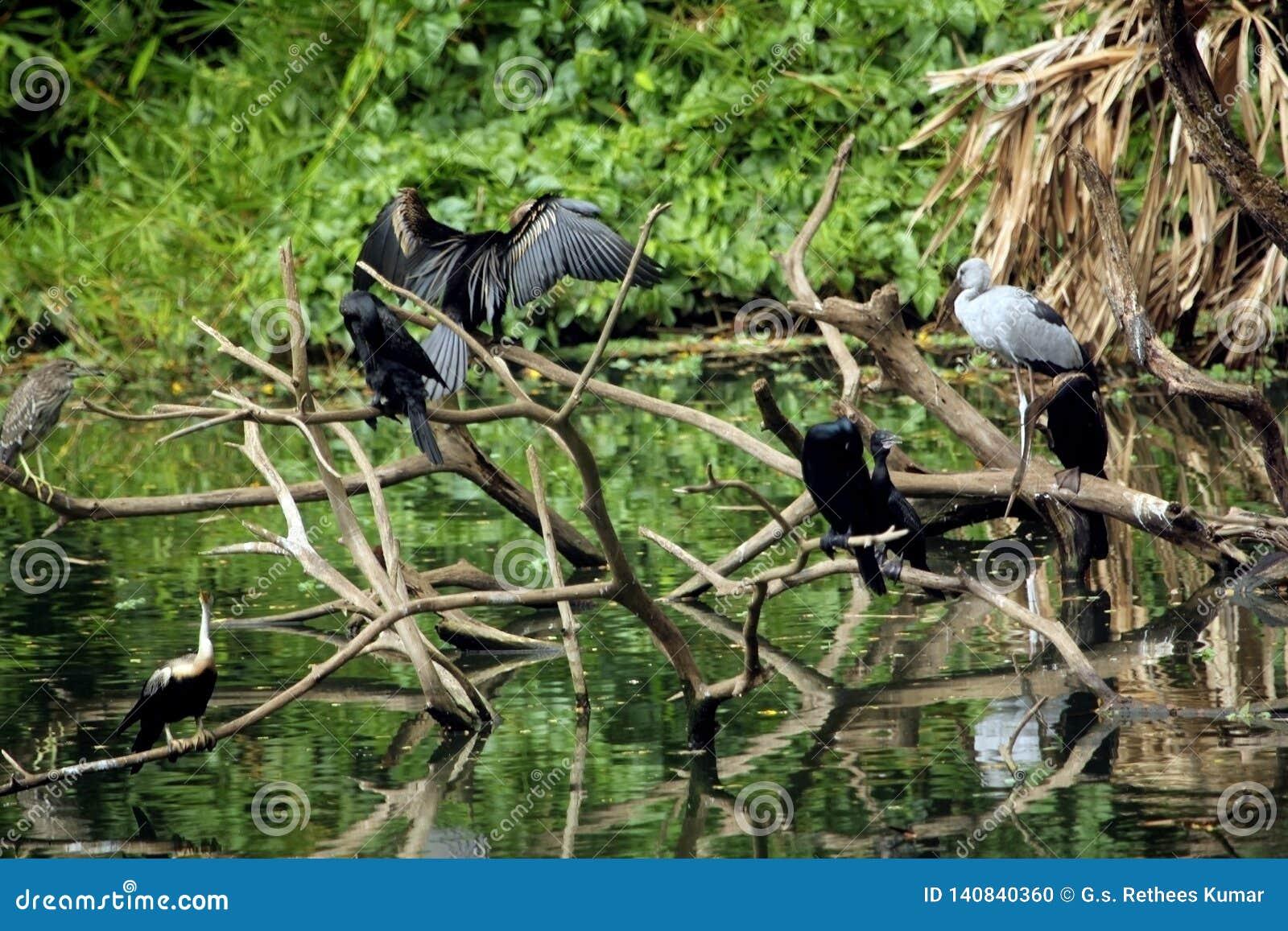 Uccelli selvaggi che riposano sui rami di albero morti sopra l acqua del lago