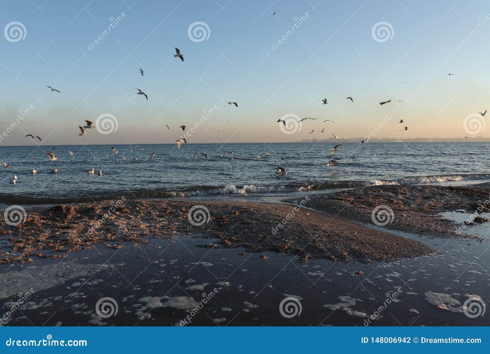Uccelli sul mare