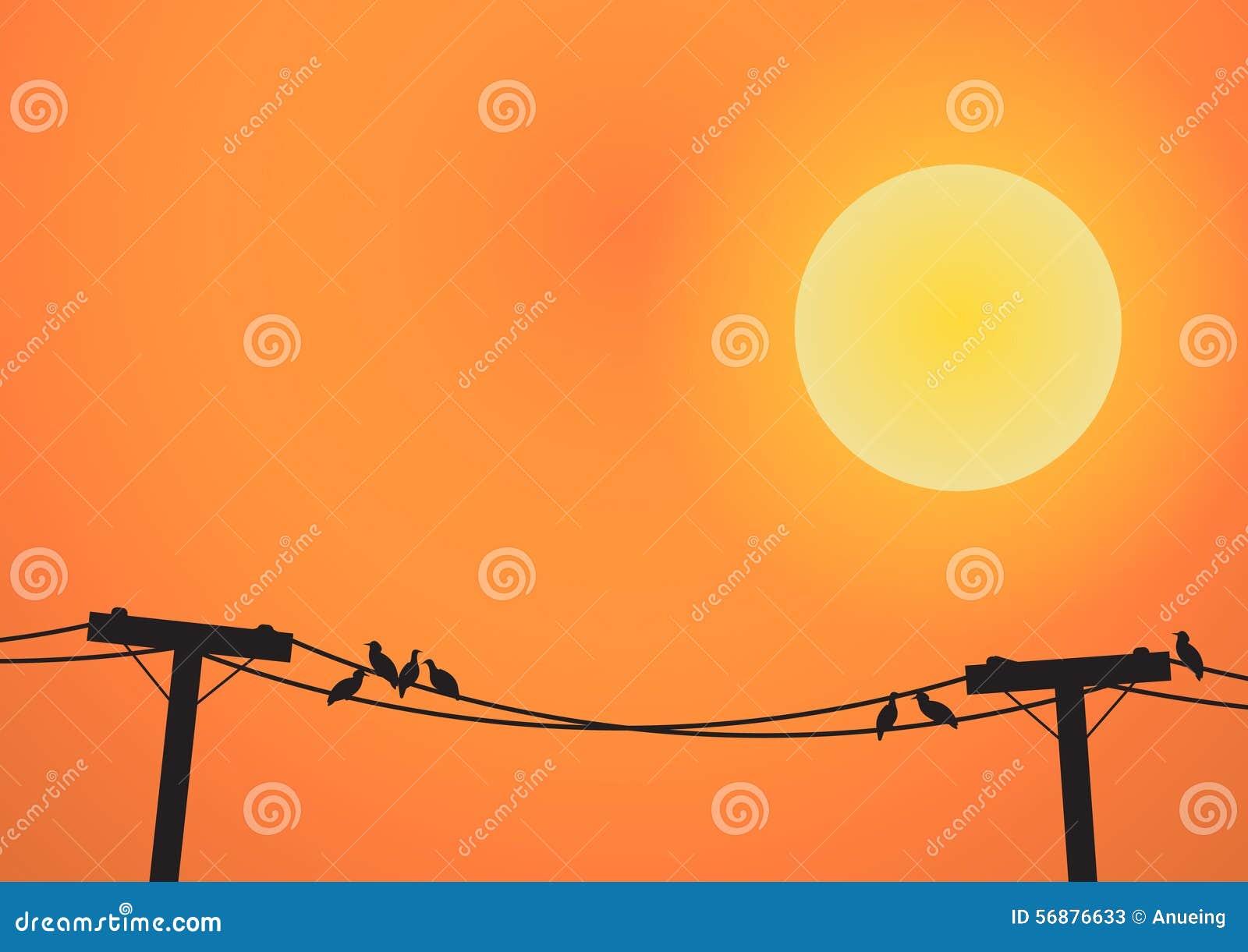 Uccelli sulla posta di elettricità prima dell insieme del sole