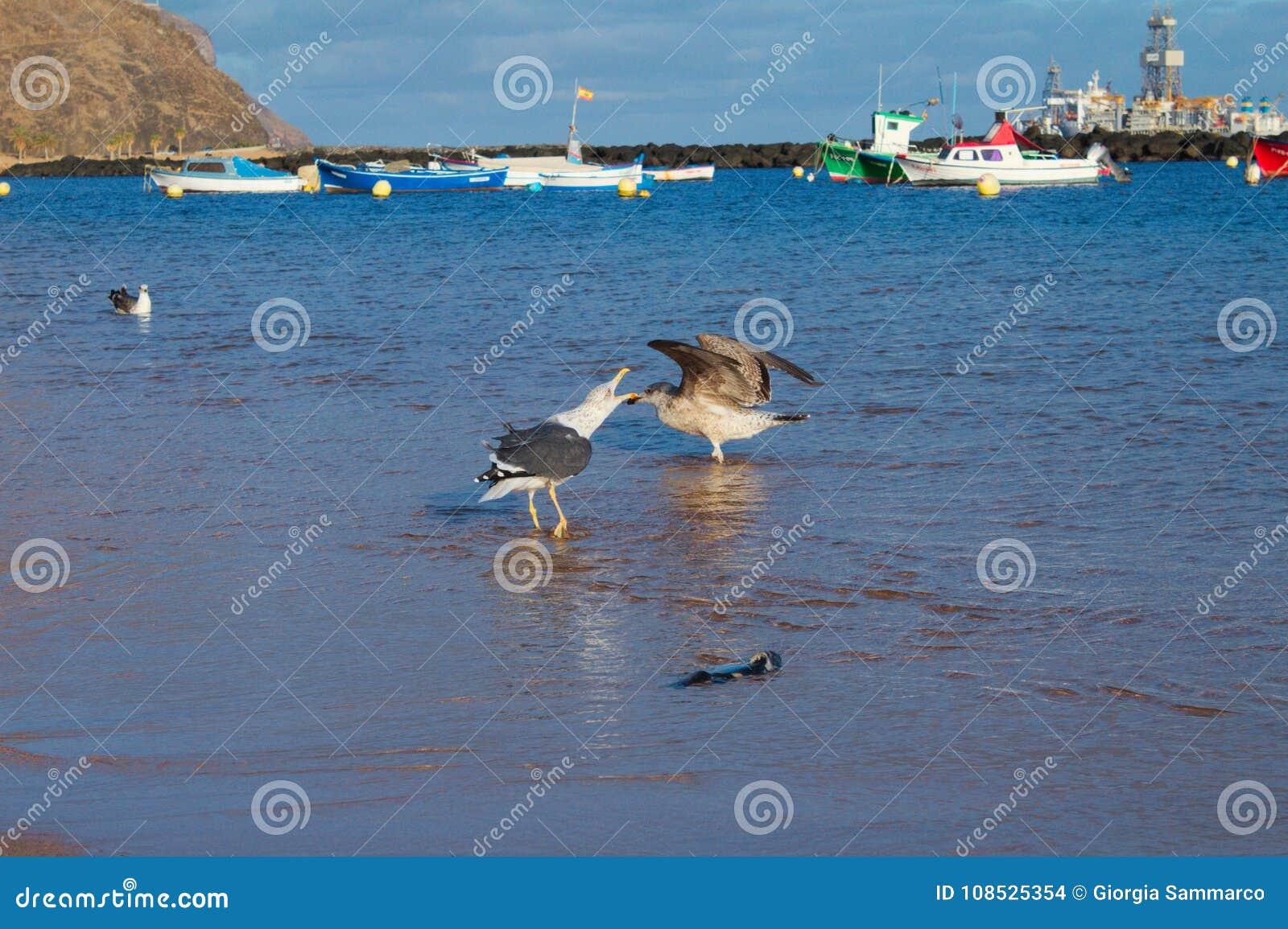 Uccelli sulla spiaggia