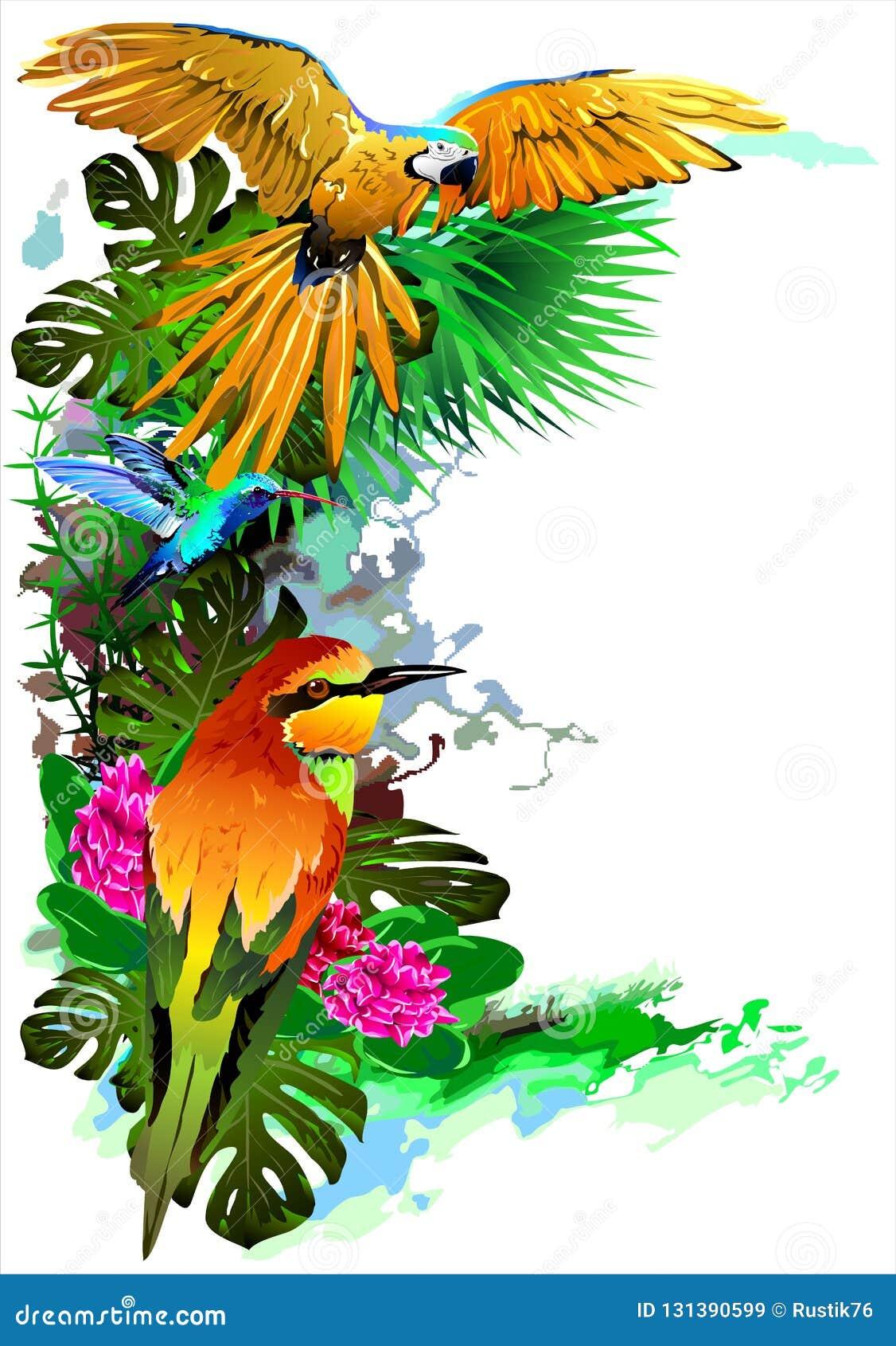 Uccelli tropicali Vettore