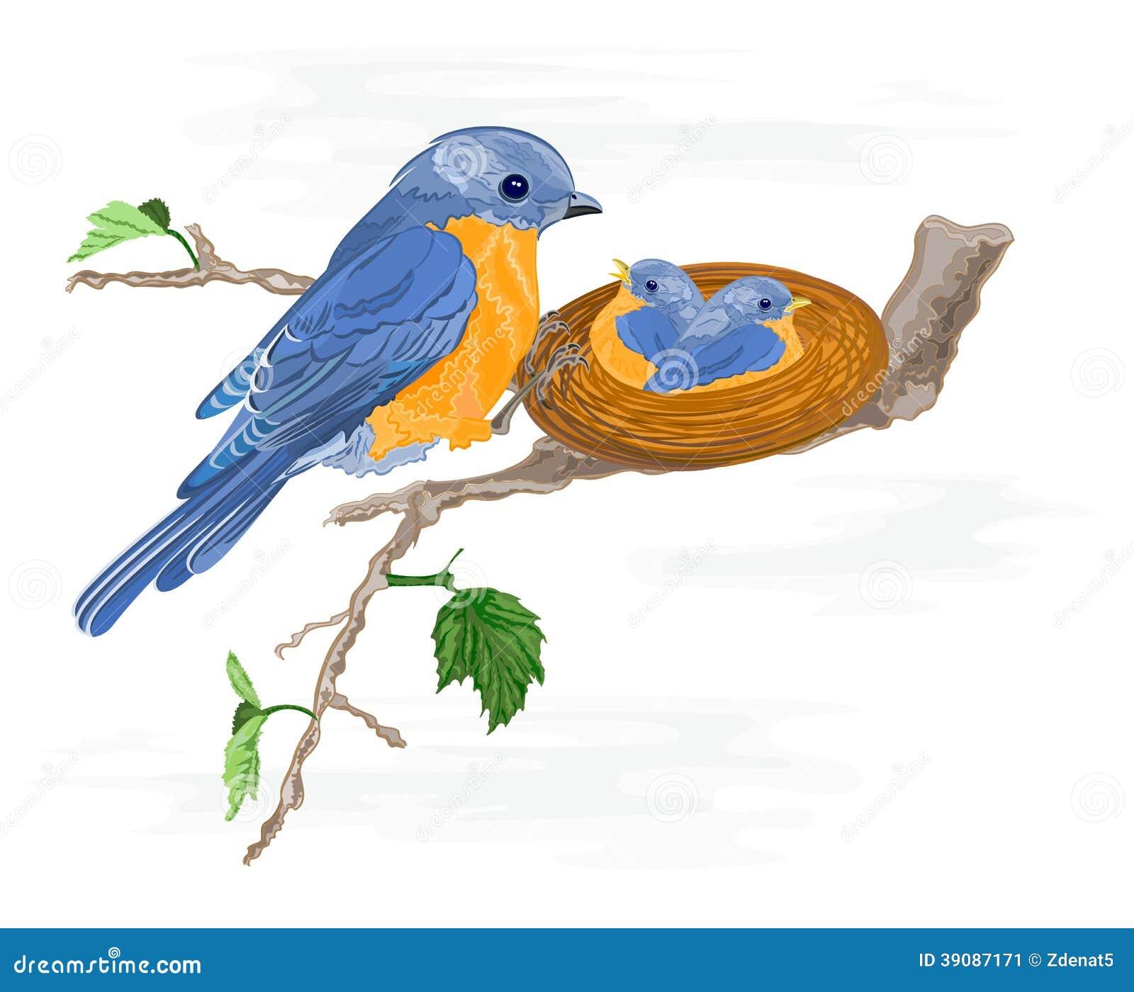 Uccellino e piccoli uccelli nel nido illustrazione for Uccellino disegno