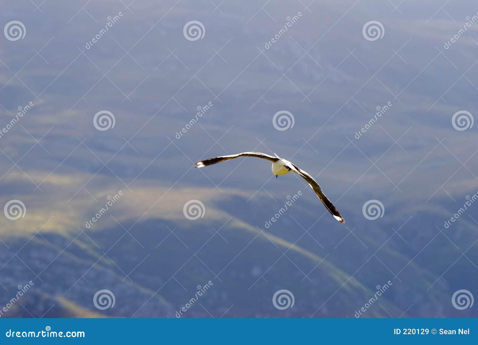 Uccello #2
