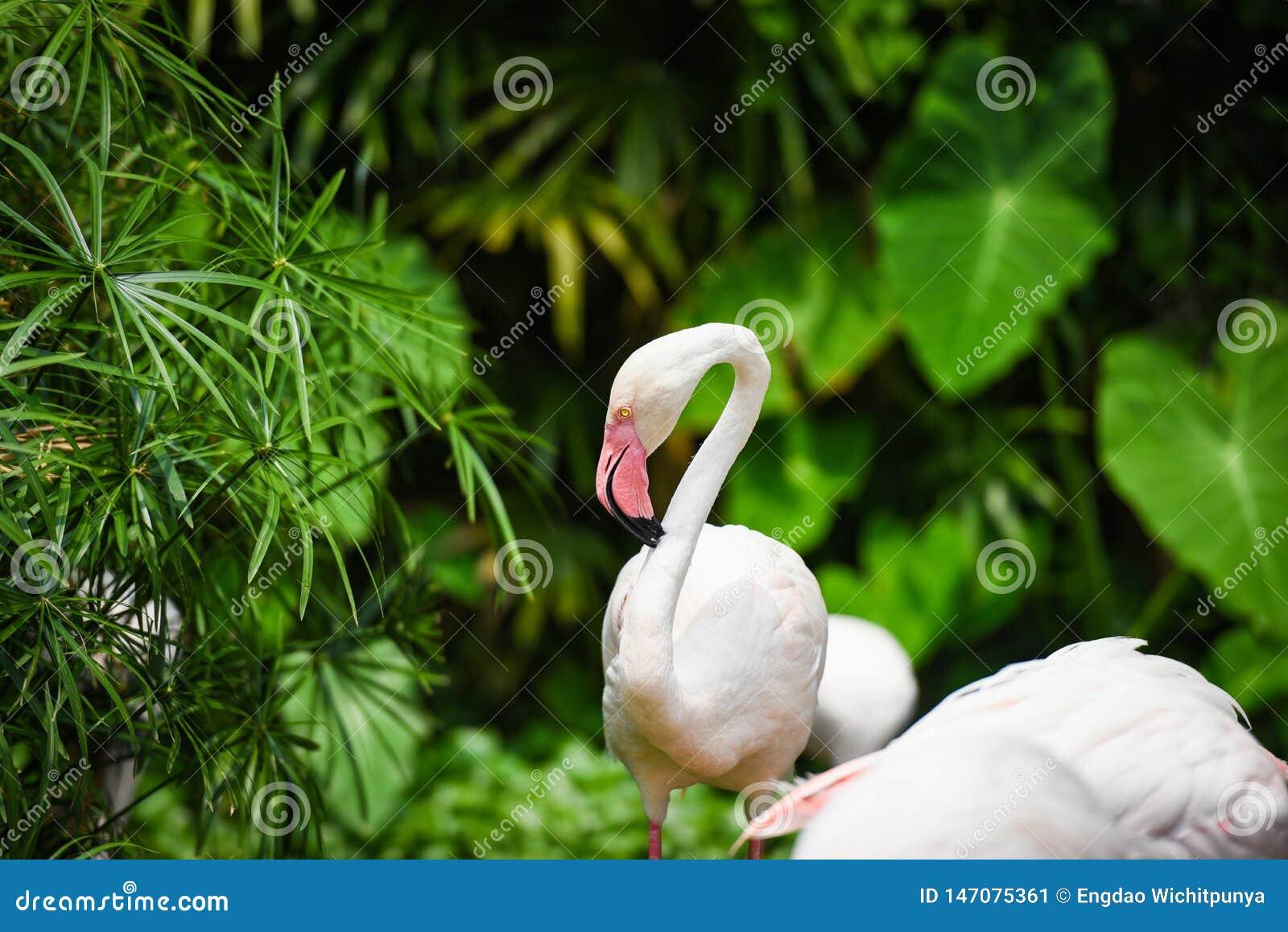 Uccello bello agli animali tropicali della natura del fiume del lago - fenicottero del fenicottero