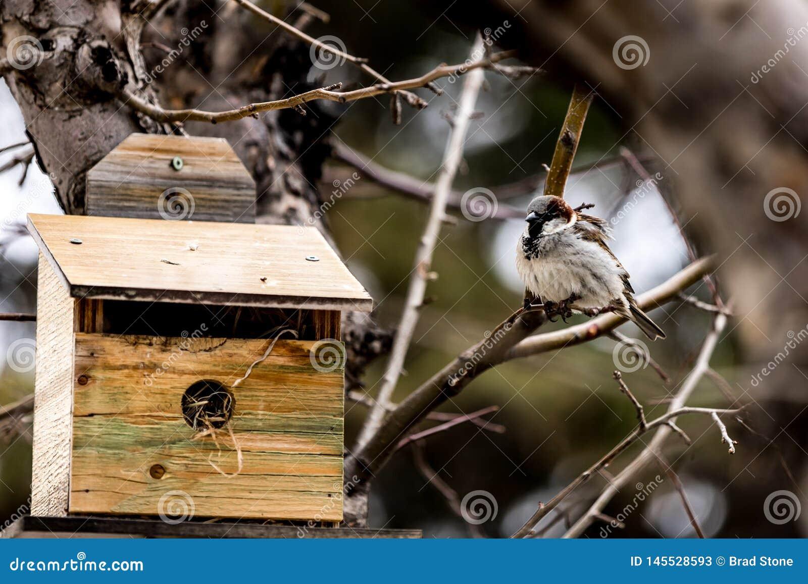 Uccello a casa