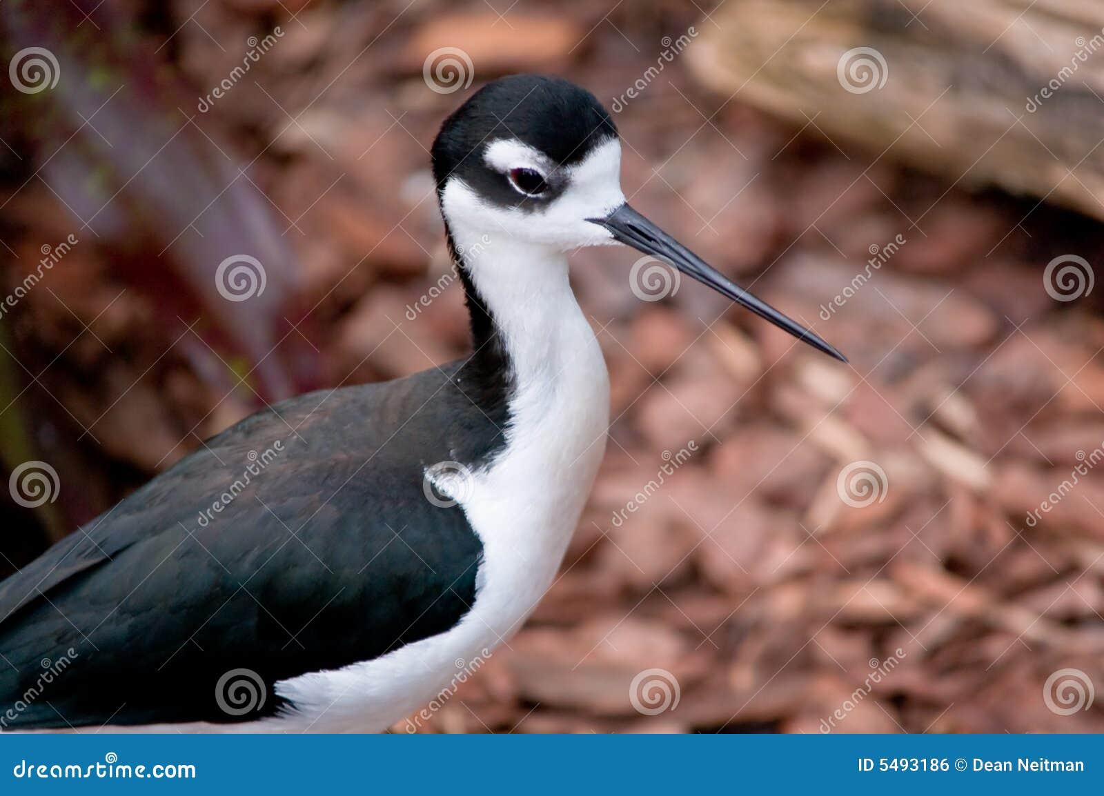 Uccello con il becco lungo