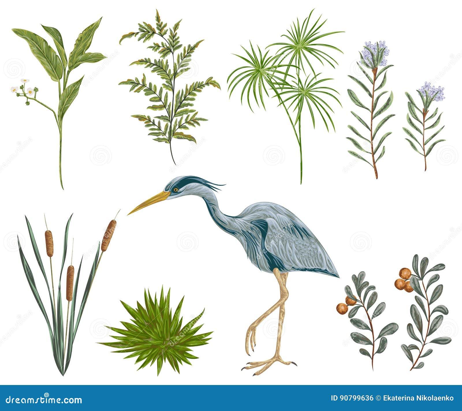 Uccello dell airone e piante di palude Flora e fauna della palude