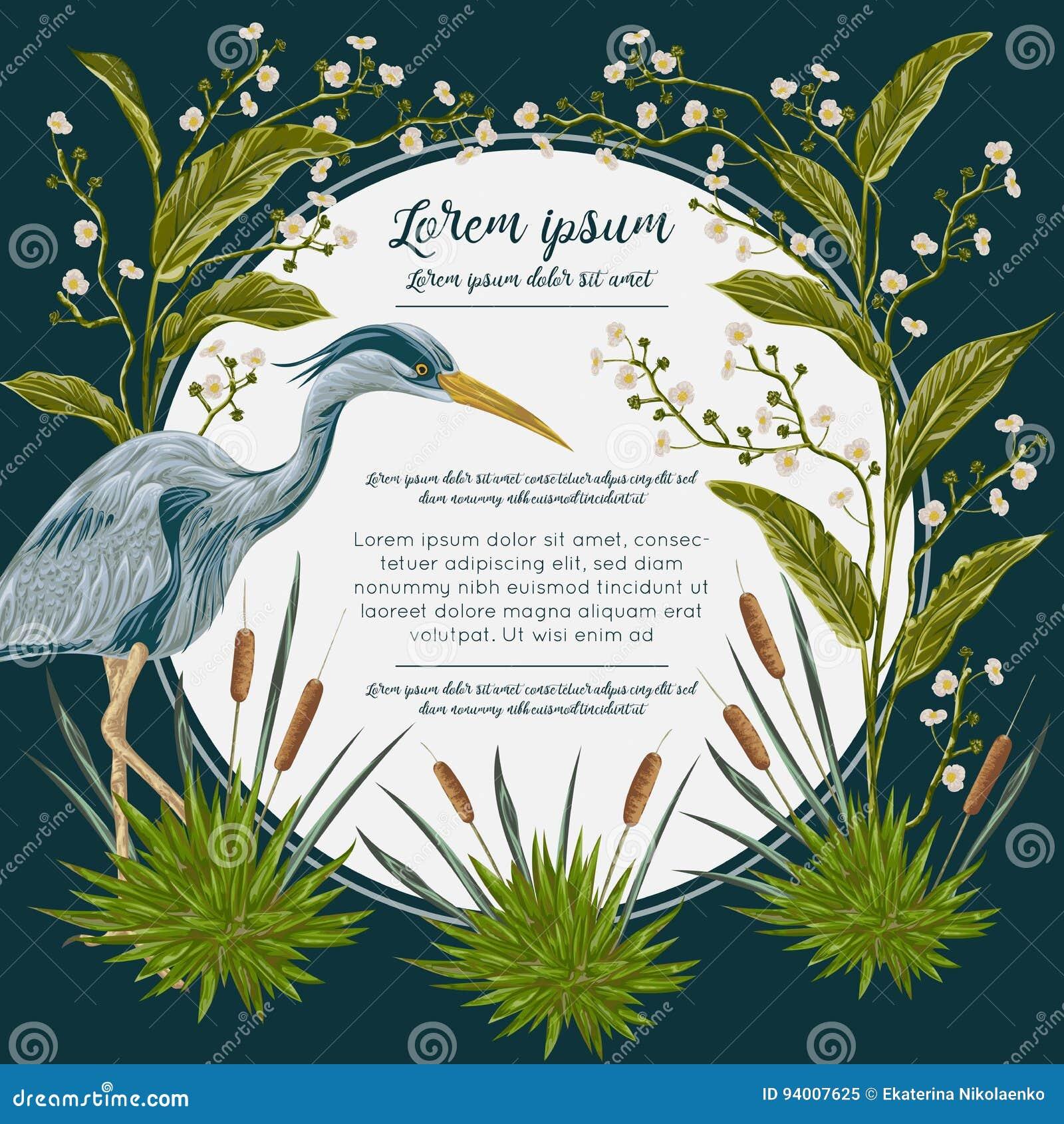Uccello dell airone ed e piante di palude Flora e fauna della palude Progetti per l insegna, il manifesto, la carta, l invito e l