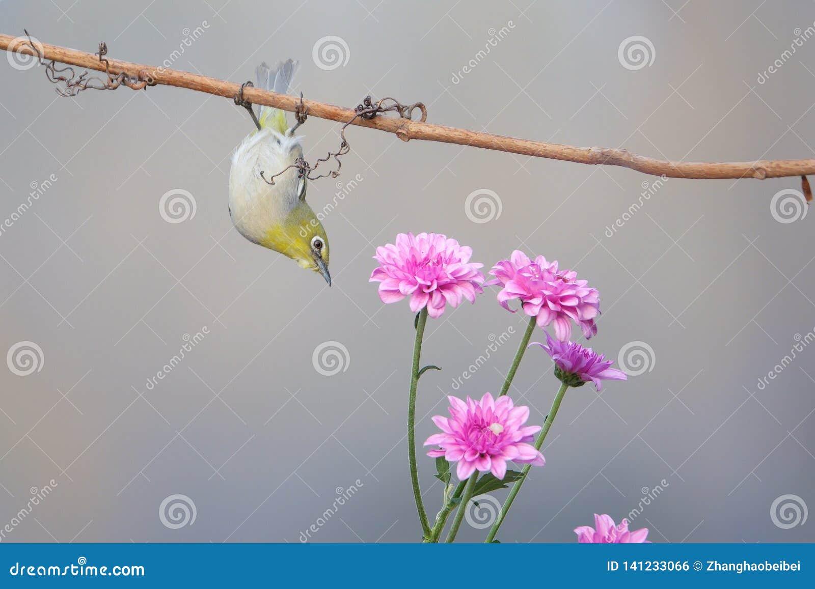 Uccello e fiore