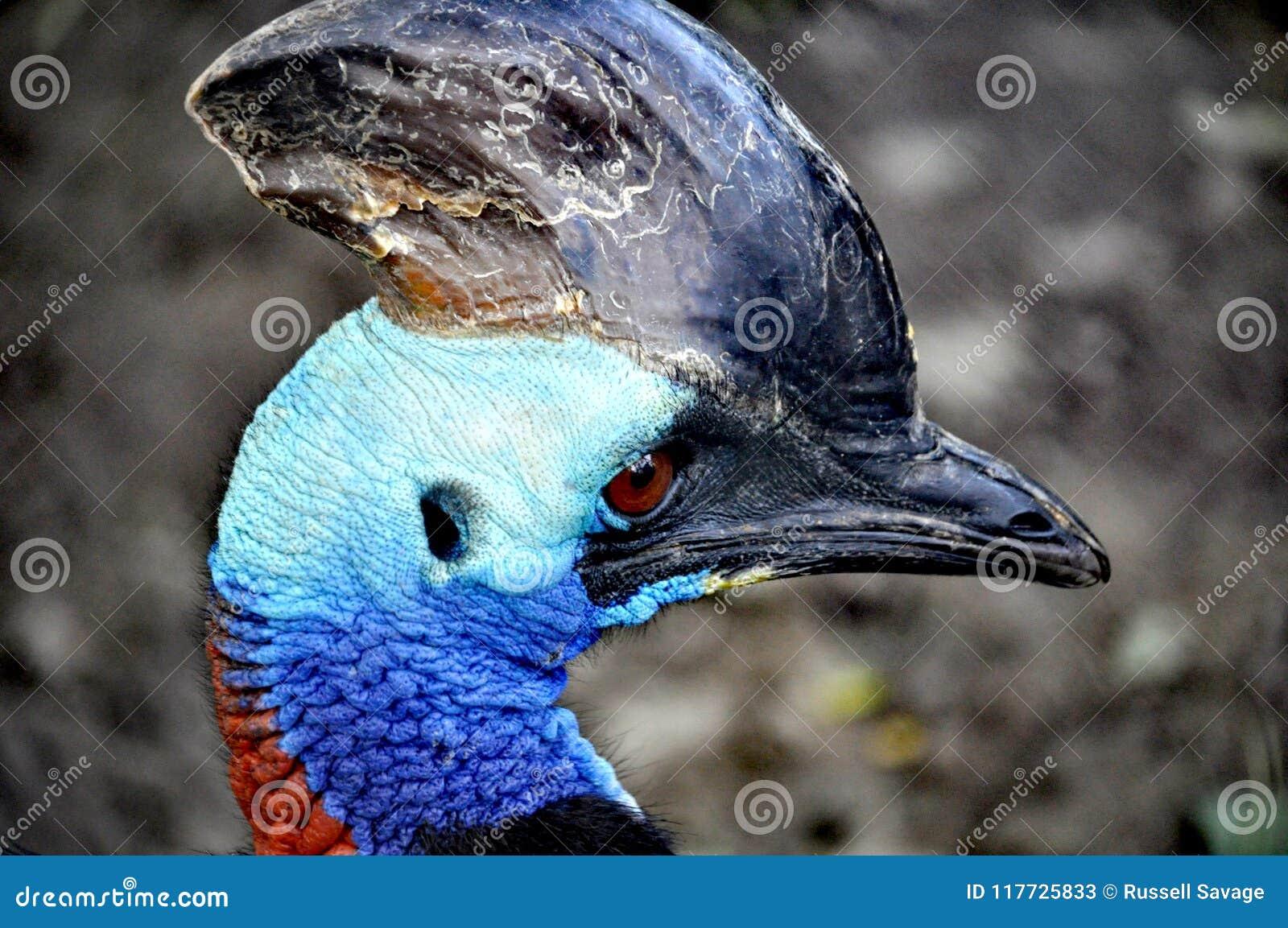Uccello esotico Bejing