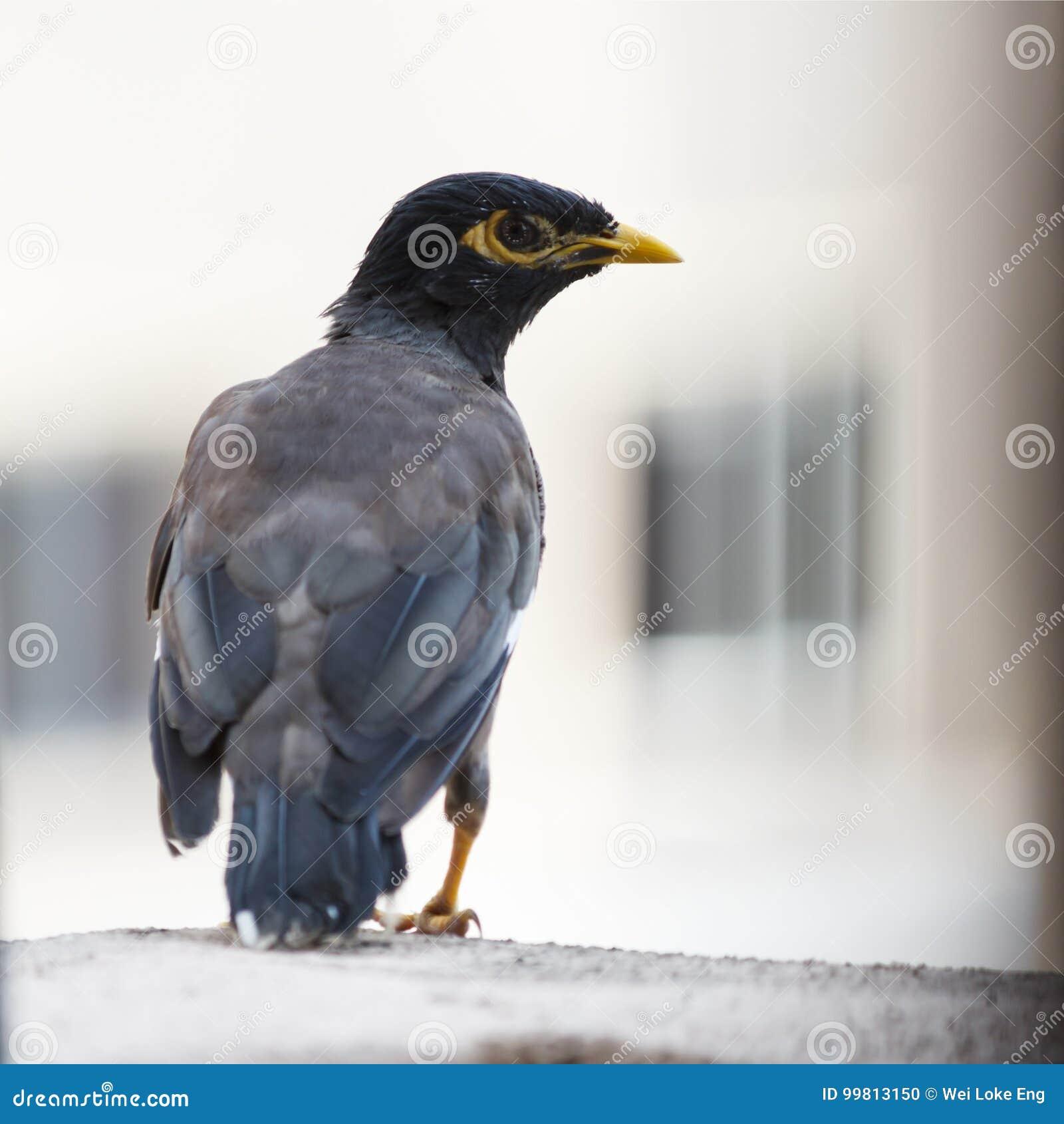 Nido Di Tortore Sul Balcone uccello selvaggio trovato sul balcone fotografia stock