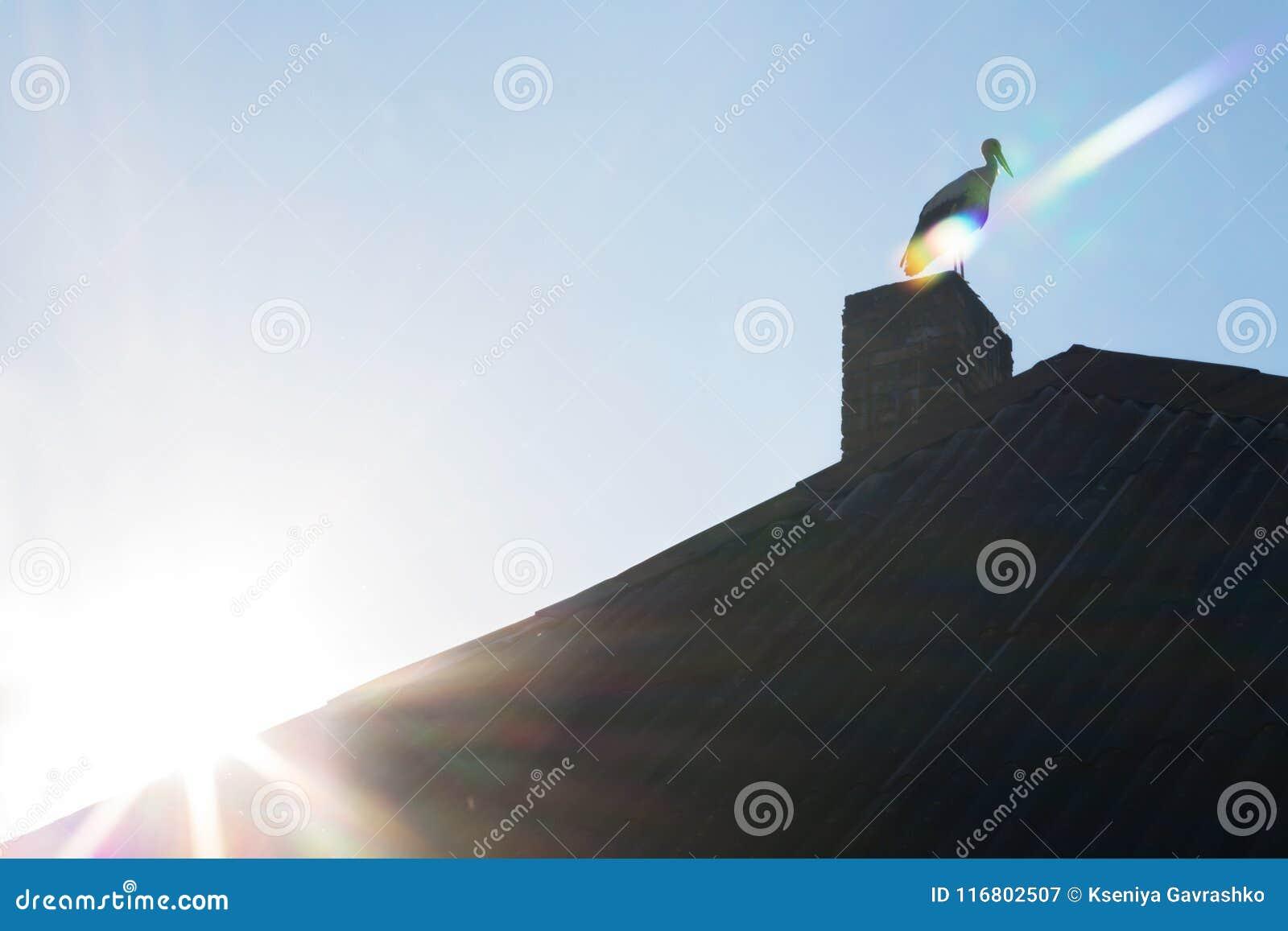 Uccello sul tetto della casa nave alba