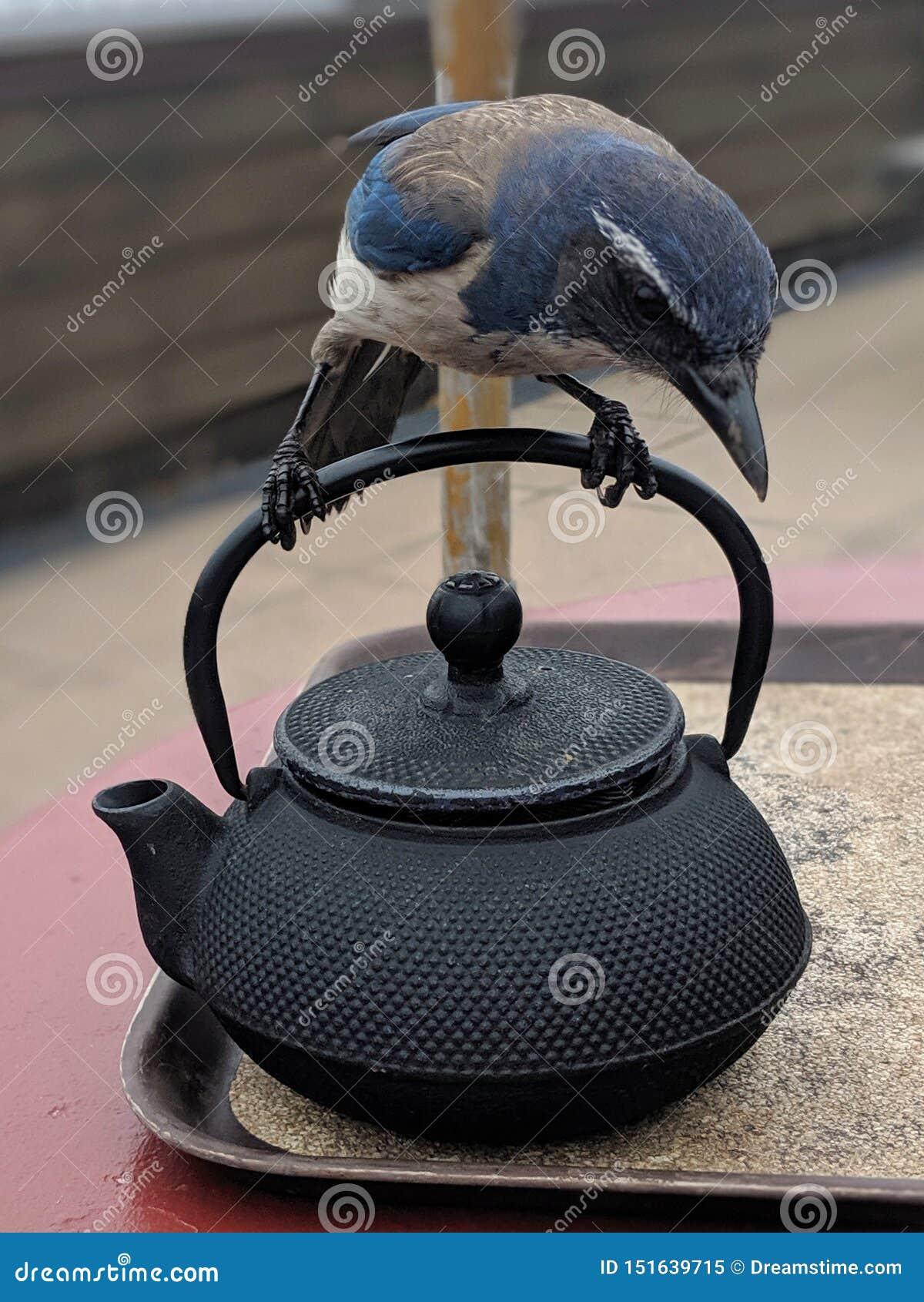 Uccello sulla teiera