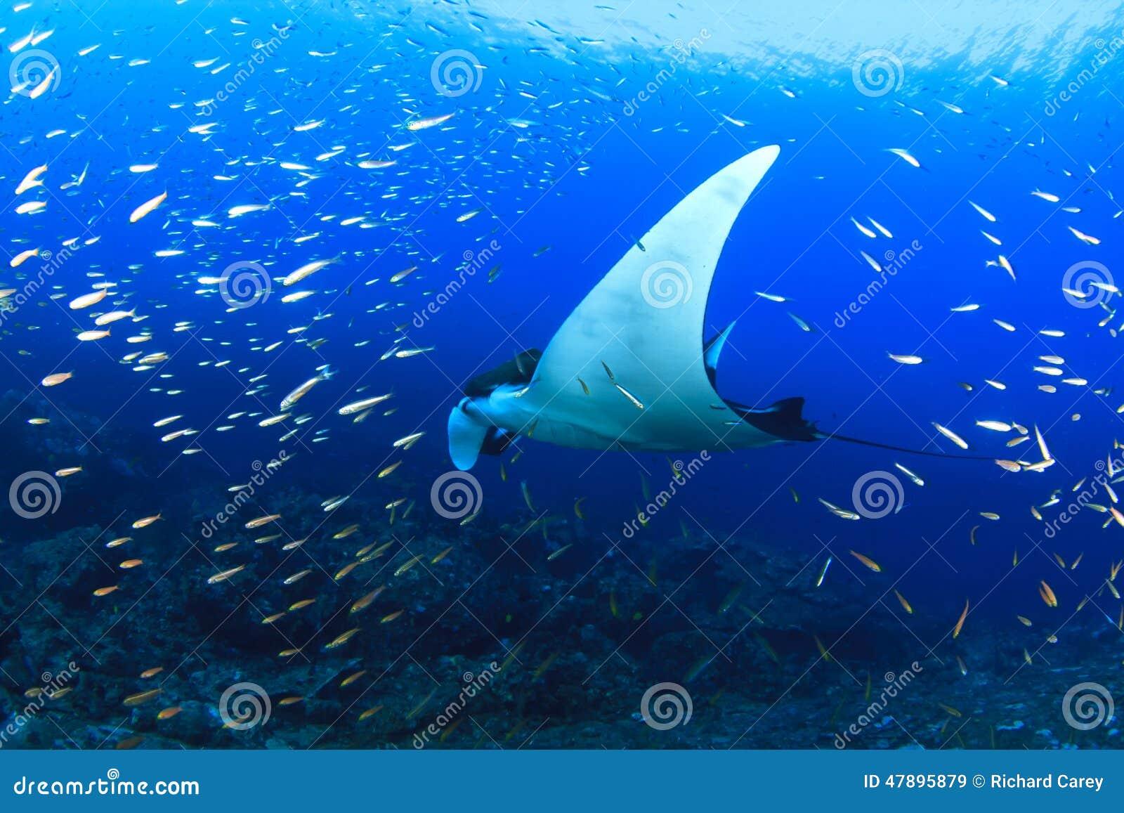 Ucieczce z atolu