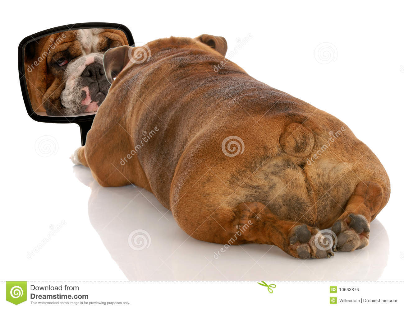 Ugly looking dogs - photo#14