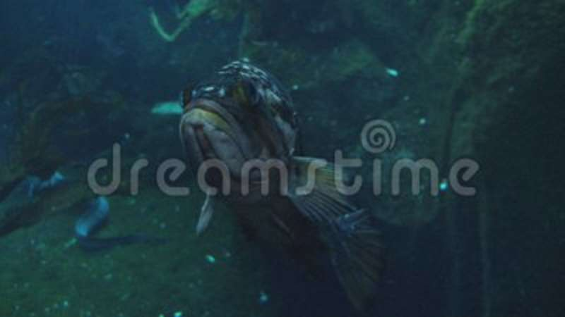 Ugly Floating Fish In Aquarium Stock Video Video Of Baby Calf