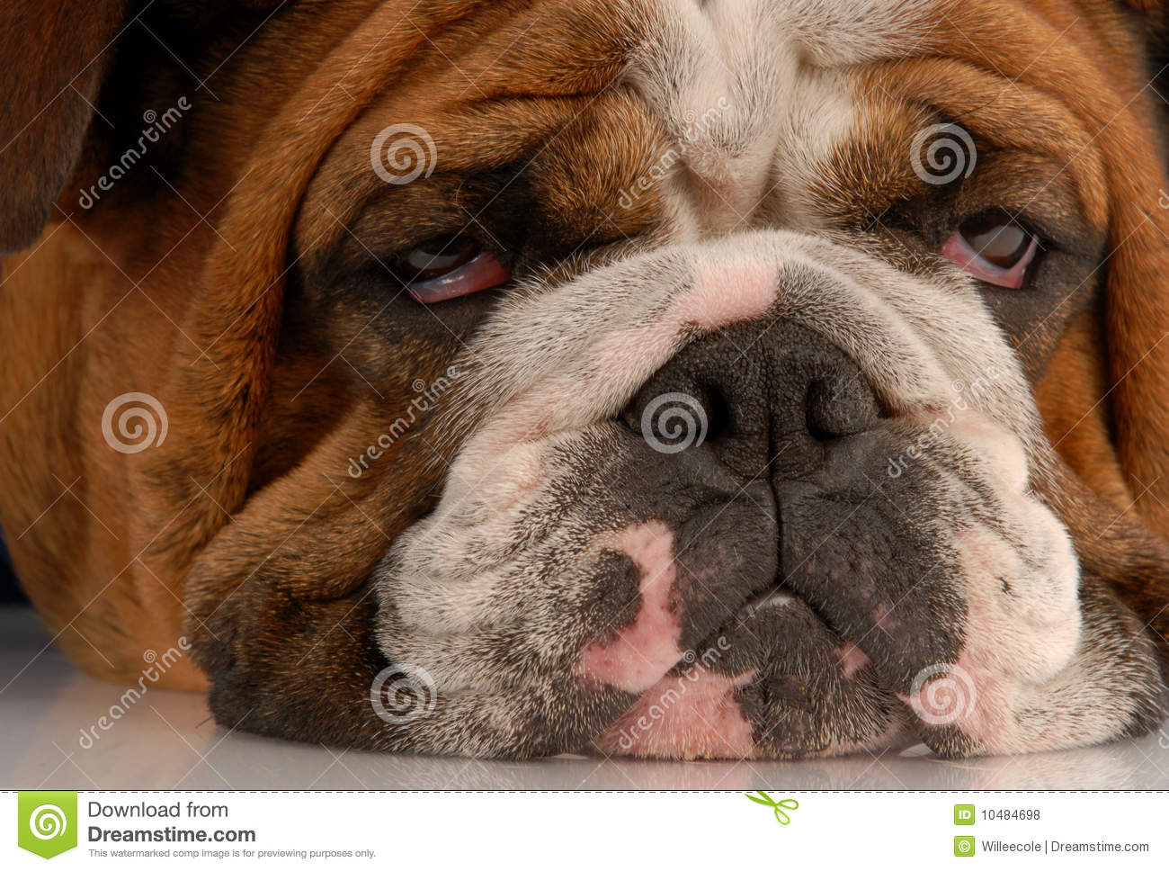 Ugly looking dogs - photo#8