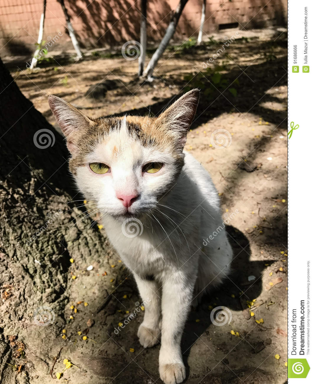 784 Ugly Cat Photos Free Royalty Free Stock Photos From Dreamstime