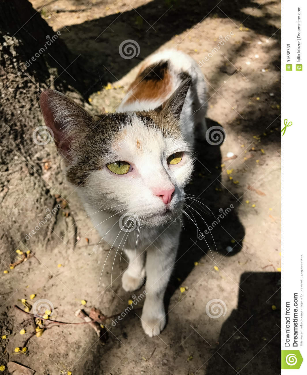 732 Ugly Cat Photos - Free & Royalty-Free Stock Photos from Dreamstime