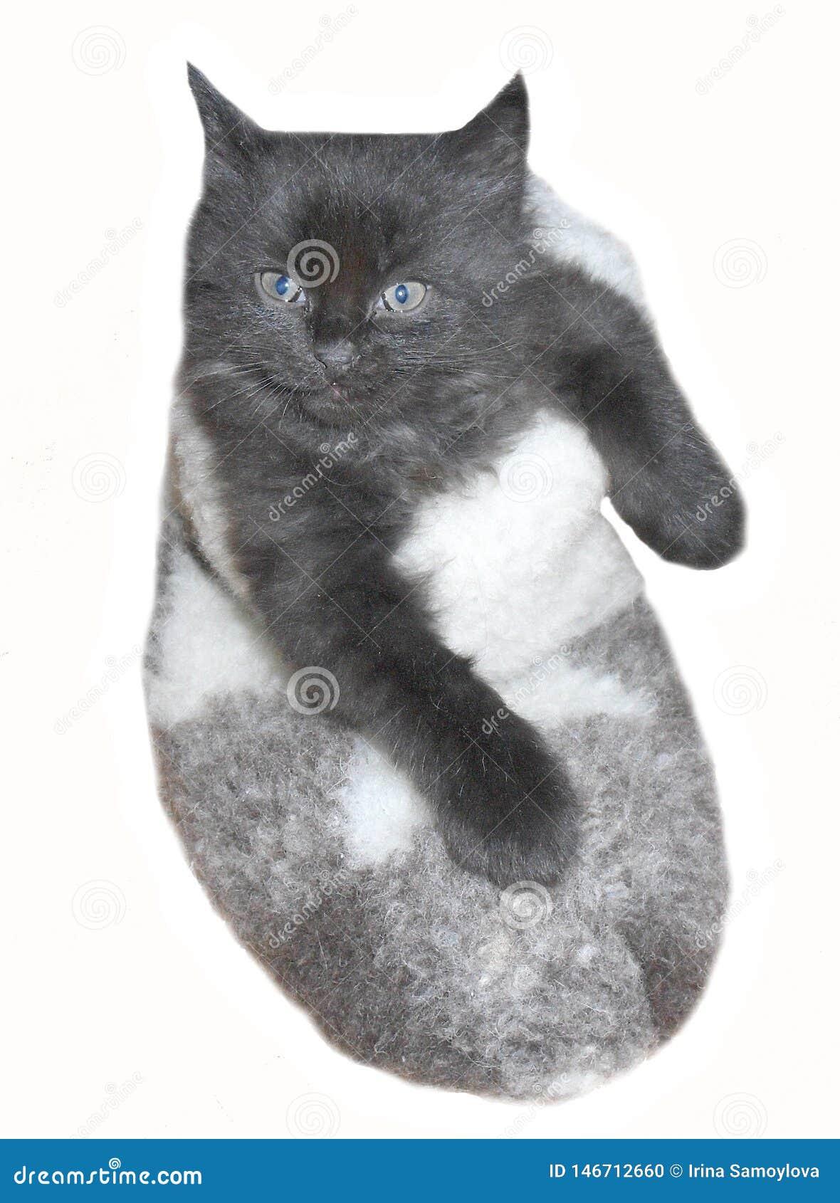 Uiterst klein leuk zwart katje in gevoelde laars