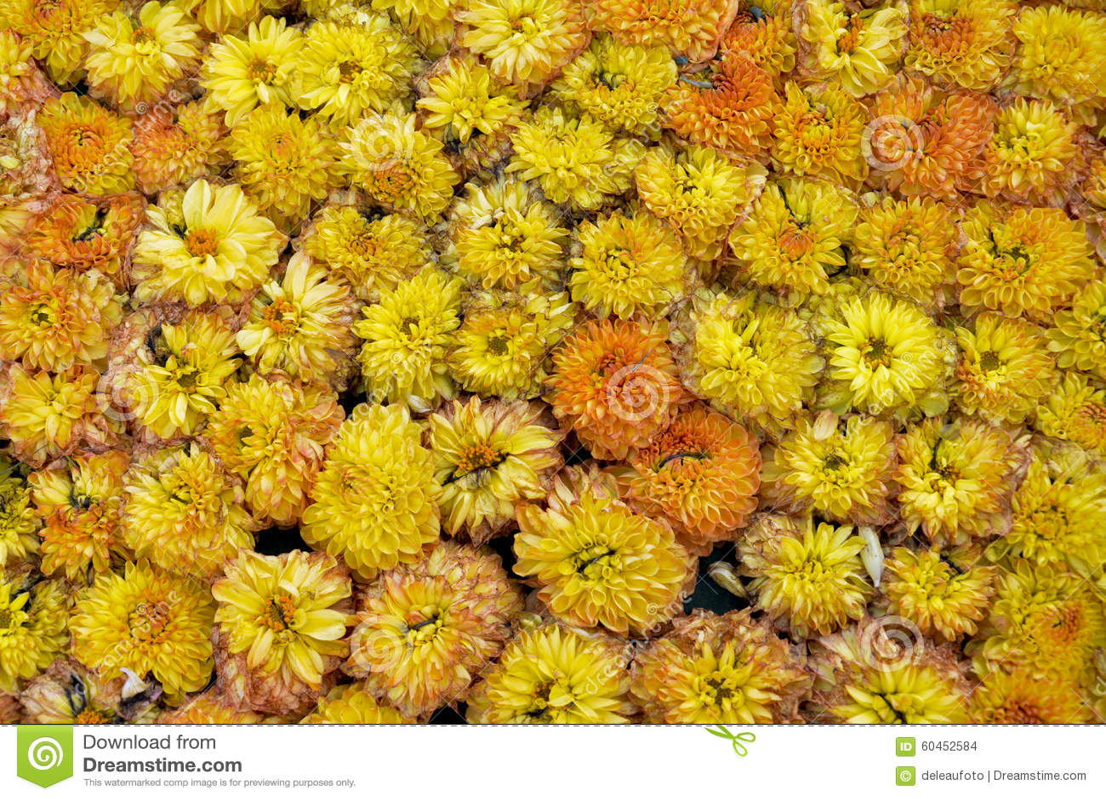 Uiterst kleine mooi van de bloemen oranje bloei velen