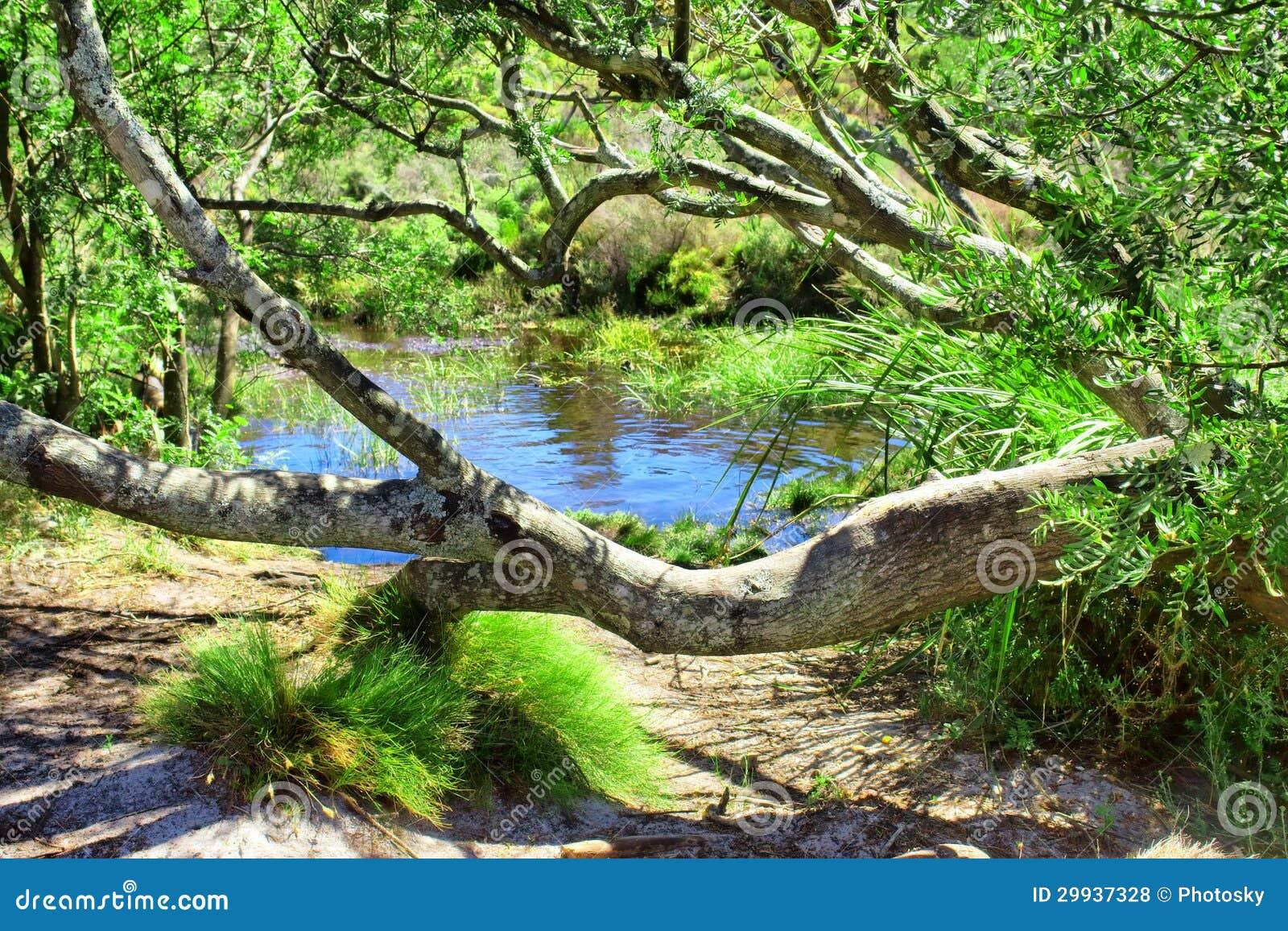 Uiterst kleine vijver in inheems bos royalty vrije stock for Kleine tuinvijver