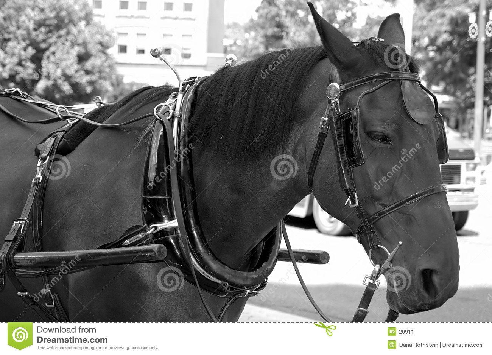 Uitgerust Paard