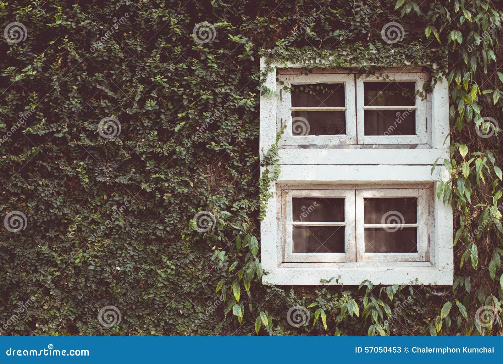 Uitstekende toon van Oud uitstekend houten venster