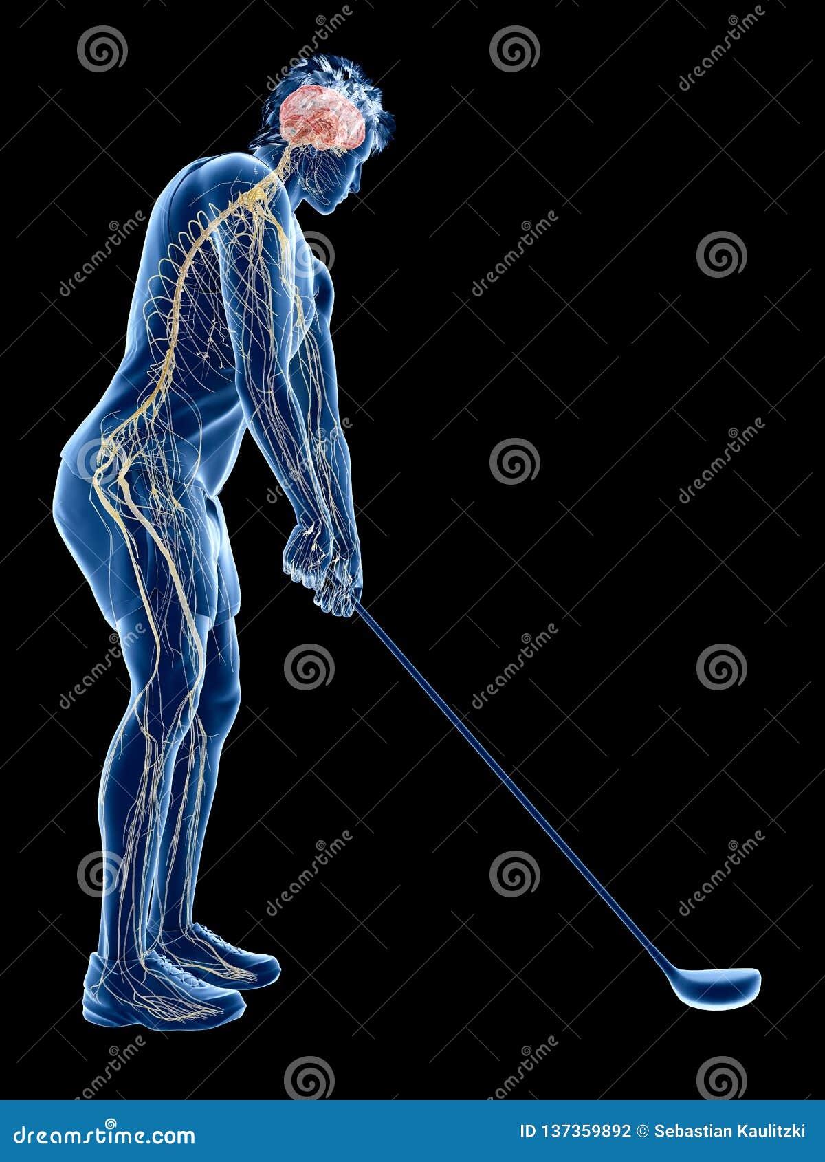 Układ nerwowy golfowy gracz