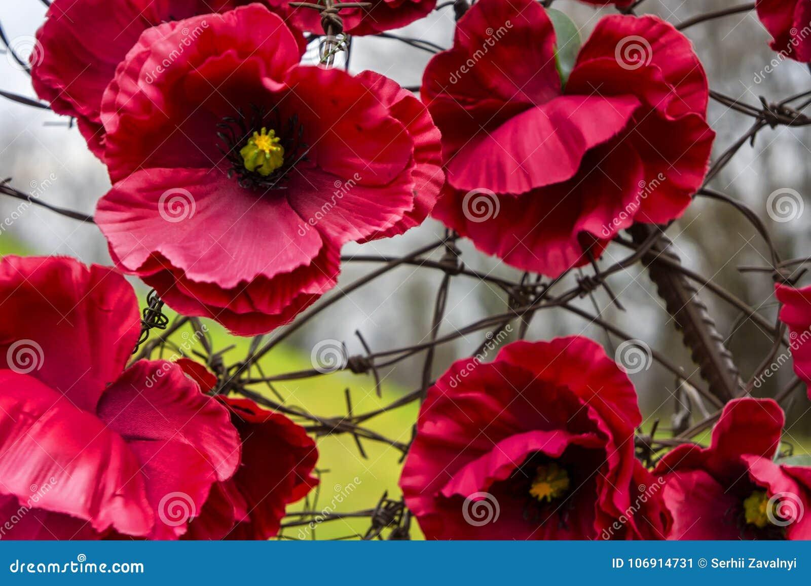 Ukraina od kwiatów i drutu kolczastego