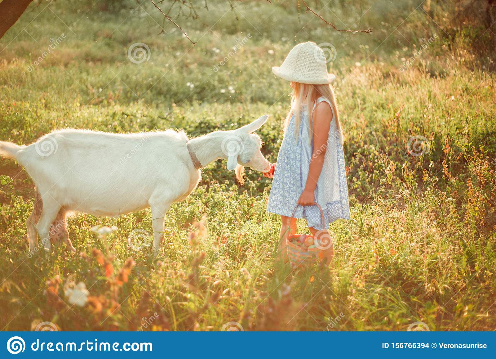 Ukrainian girl on a farm feeds a goat. Cute little girl with long blonde hair at sunny sunset spends time with a pet. Cute baby 6