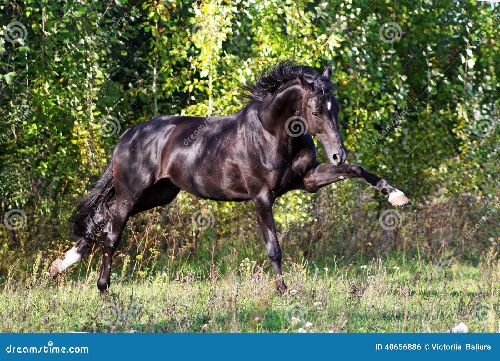 Ukrainian Horse Breed Horses Stock Photo Image 40656886