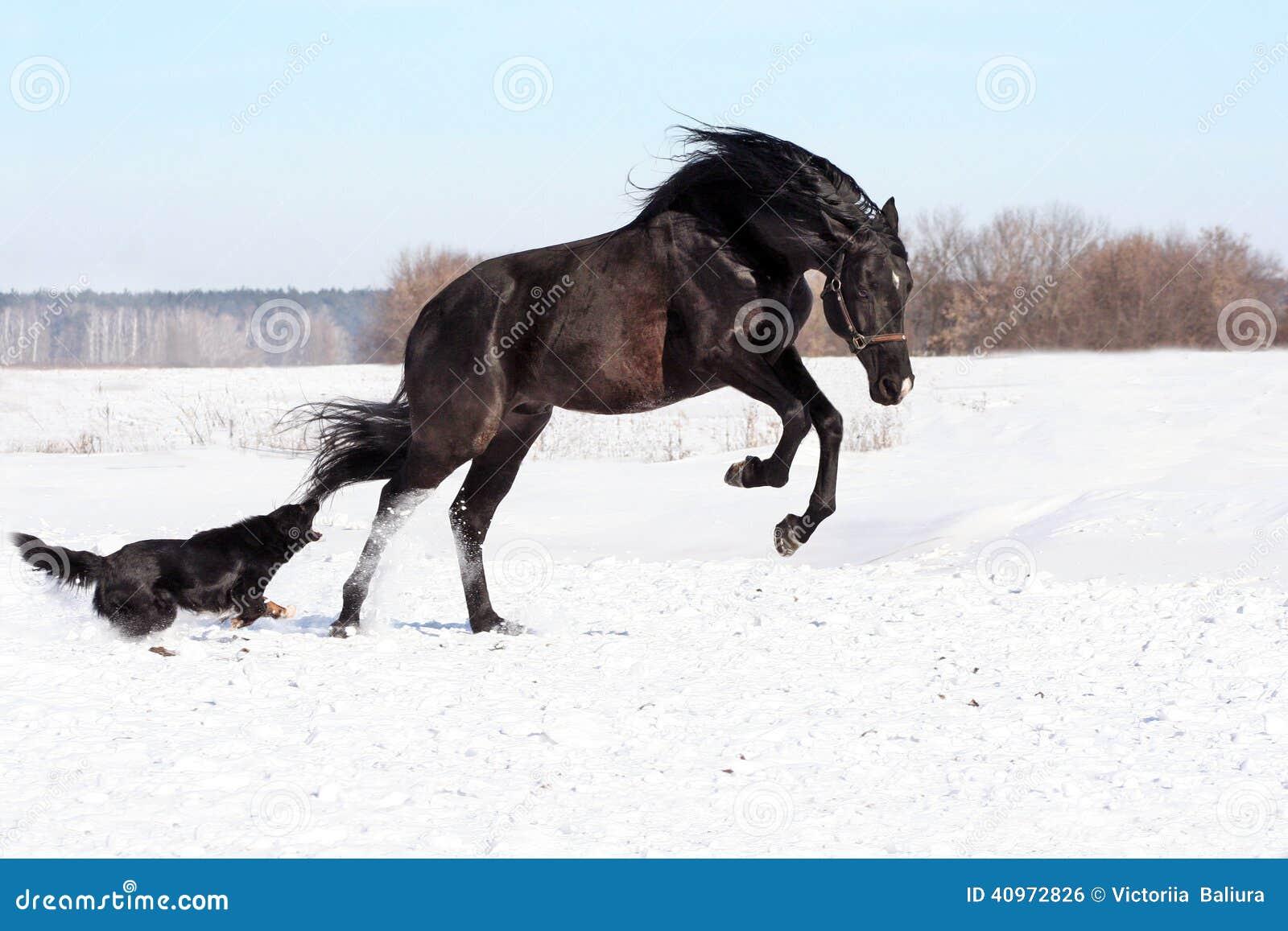 ukrainische pferdezuchtpferde stockfoto bild 40972826. Black Bedroom Furniture Sets. Home Design Ideas