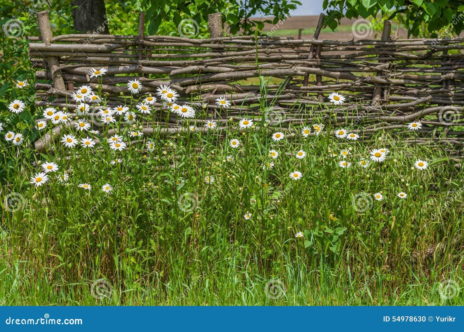 Ukrainsk historisk identitet - wattled staket