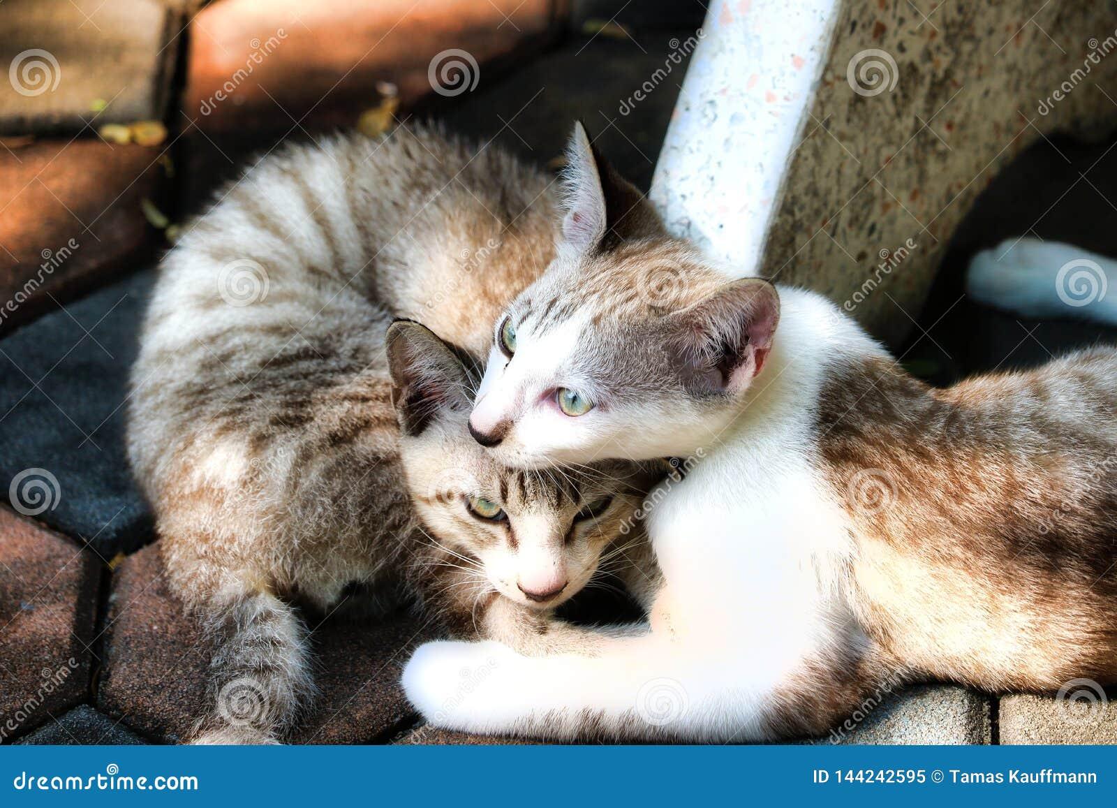 Uliczna kot para w Bangkok