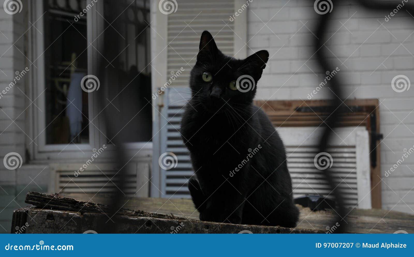 Uliczny kot