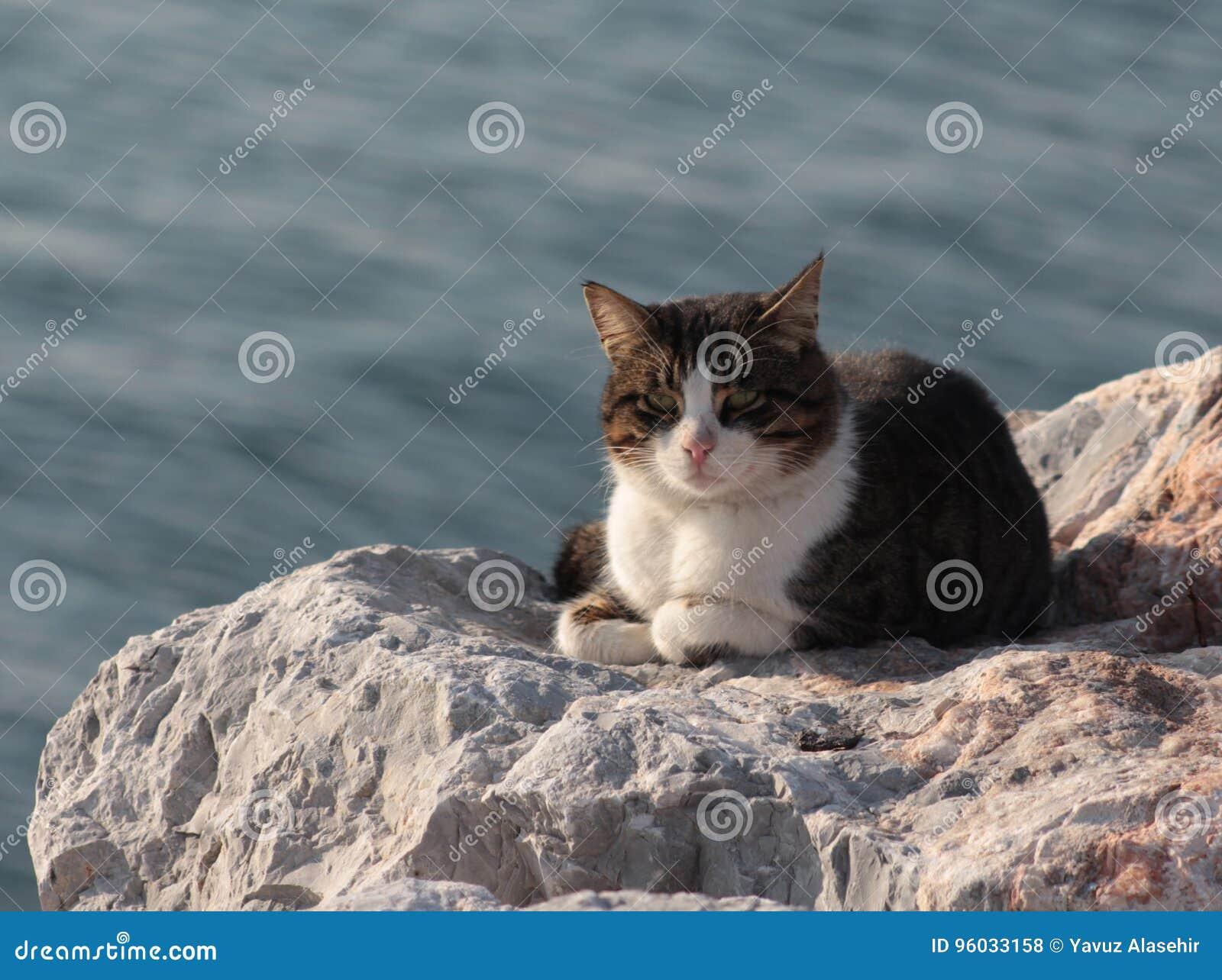 Uliczny kot bierze sunbath na skale