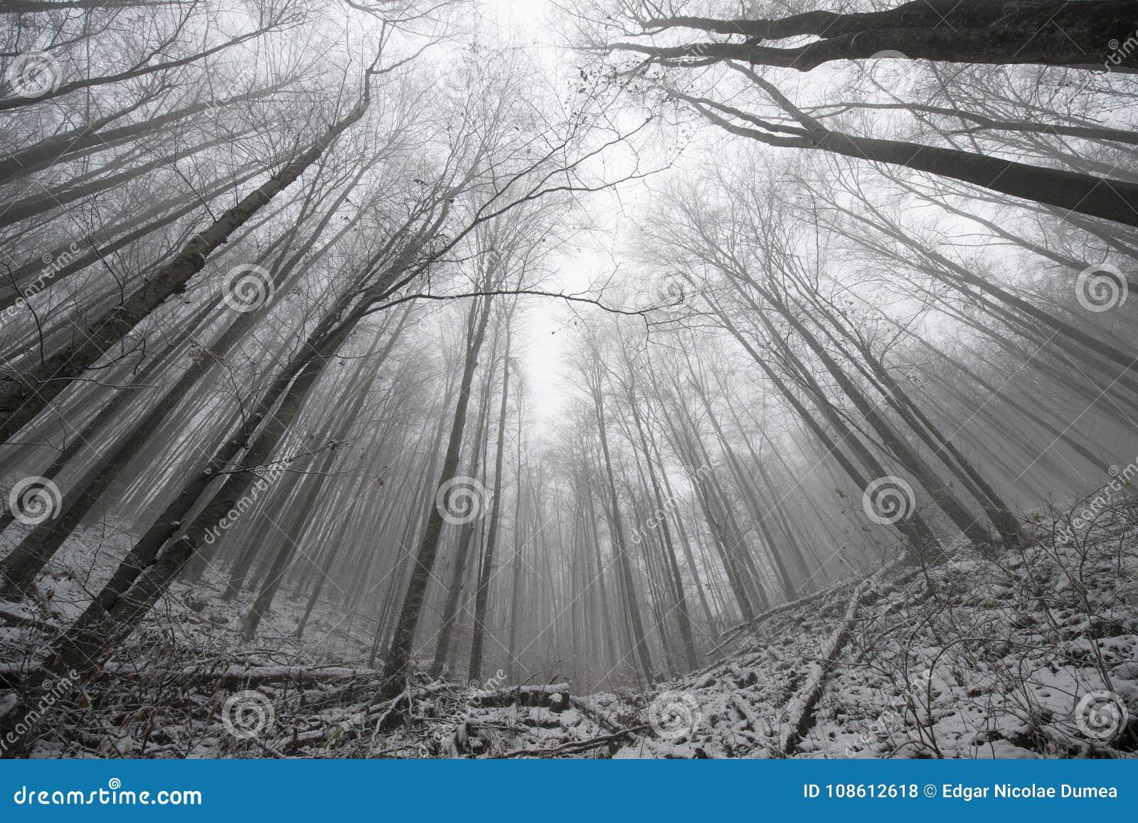 Ultra brede hoekbomen