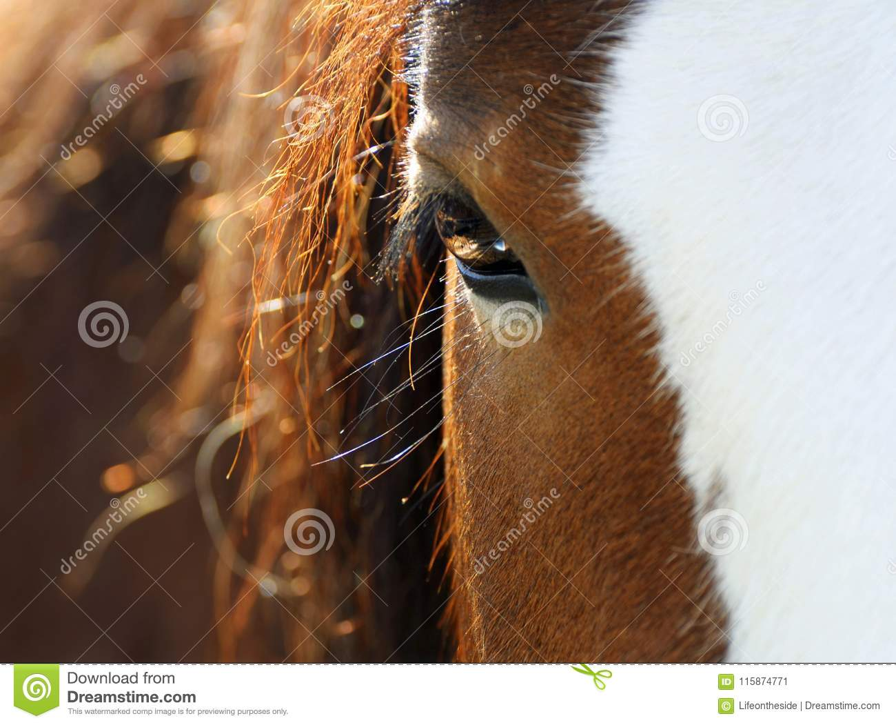 Closeup gentle soft eyes and mane of chestnut horse pet in sunset