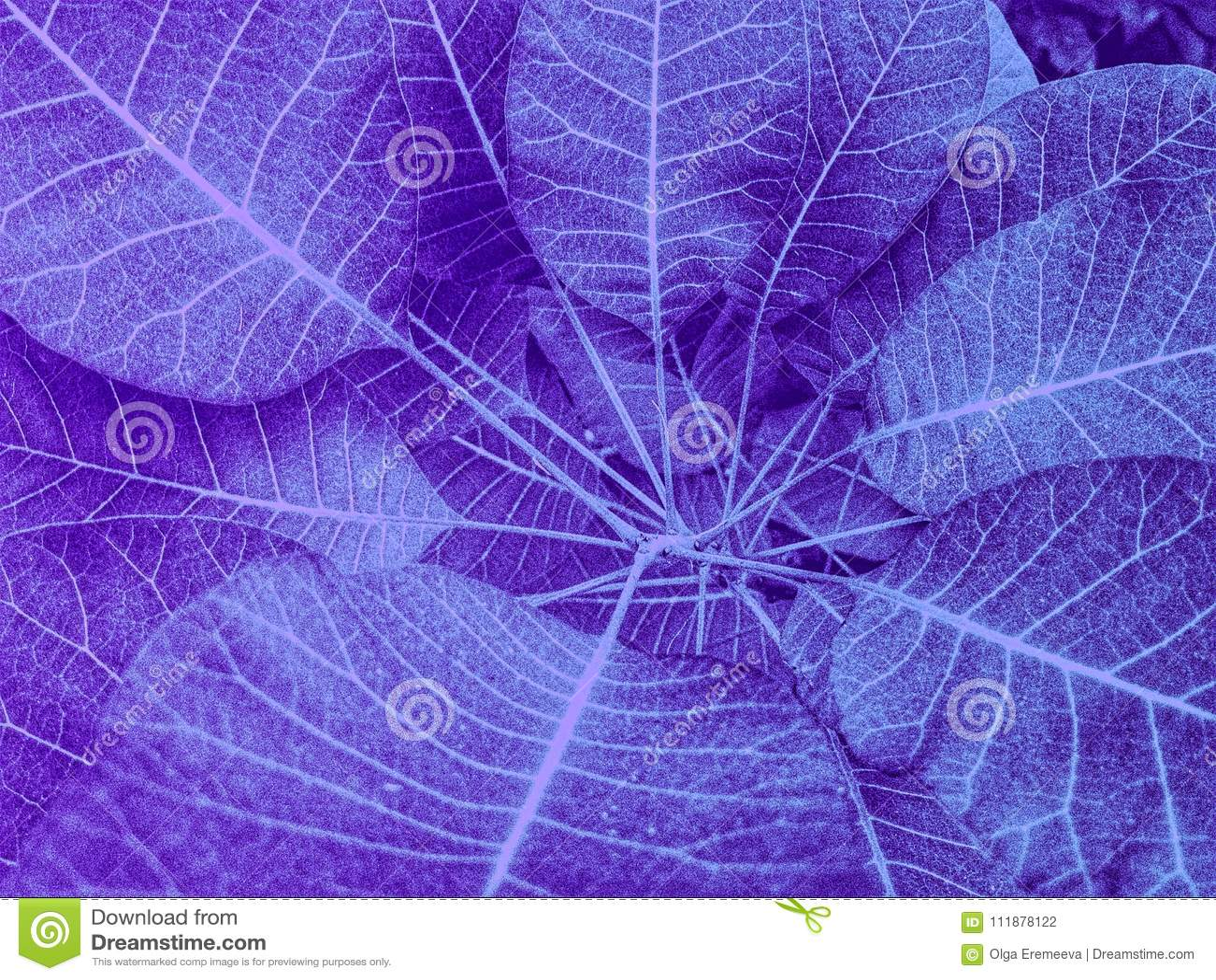 Ultra violet transparent leaves in closeup