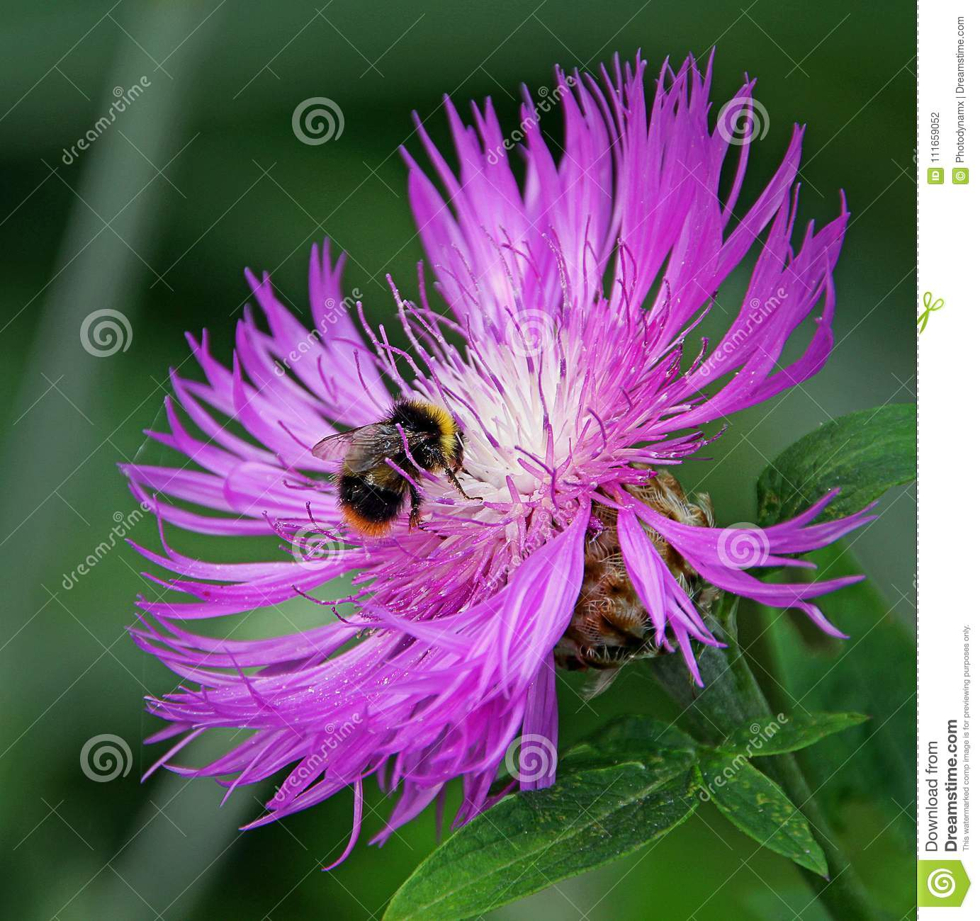 Ultra violet world of a bumble bee
